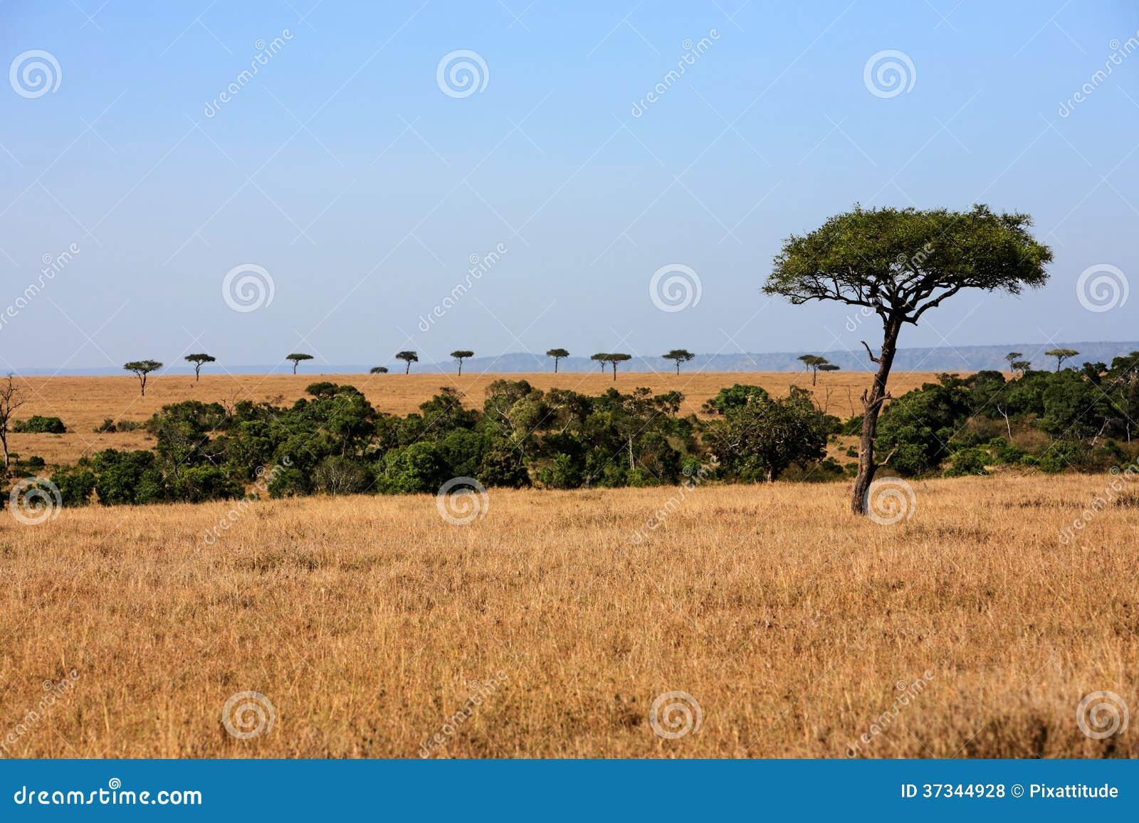 SlättMasaiMara reserv Kenya Afrika