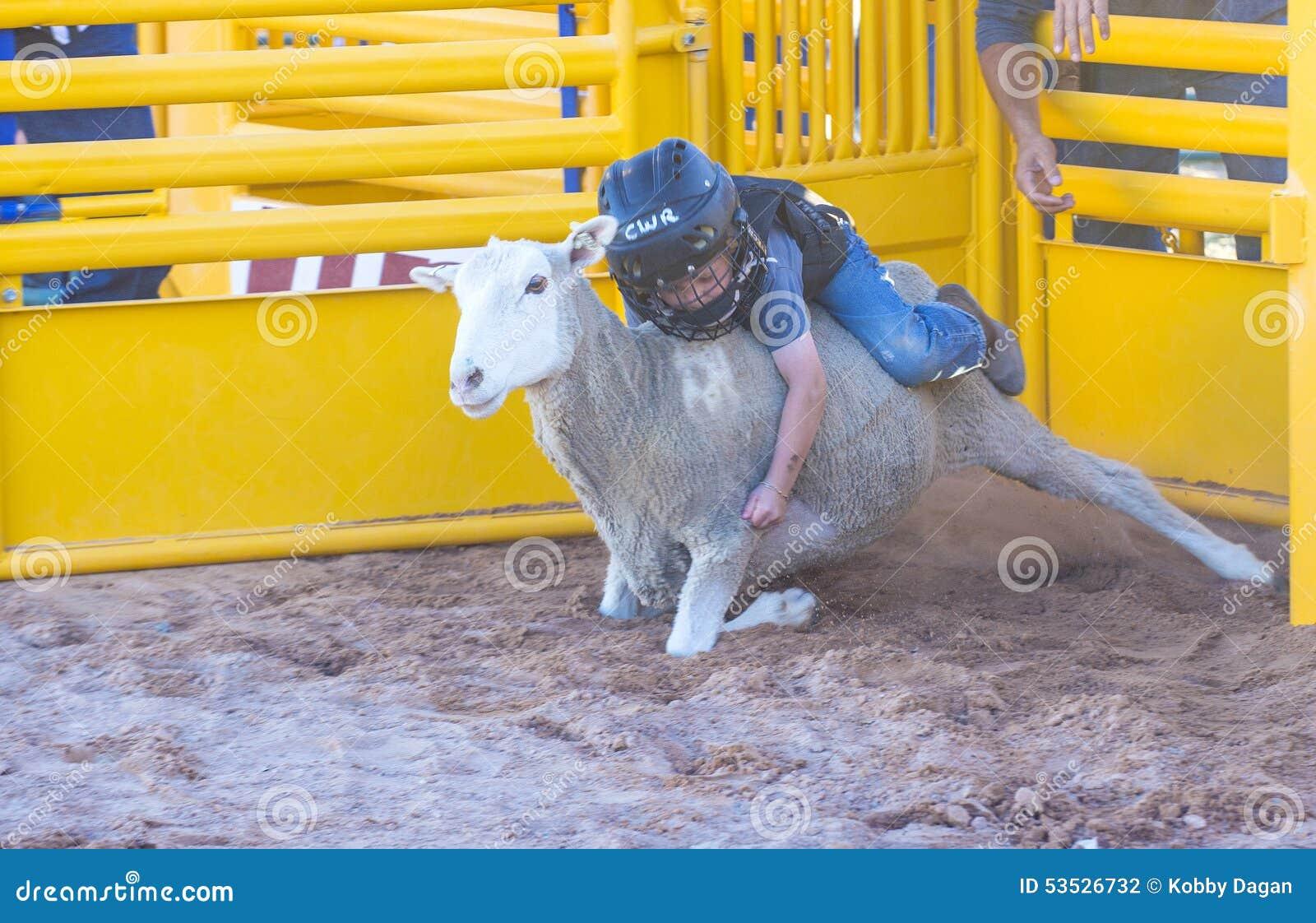 Slå sönder för fårkött