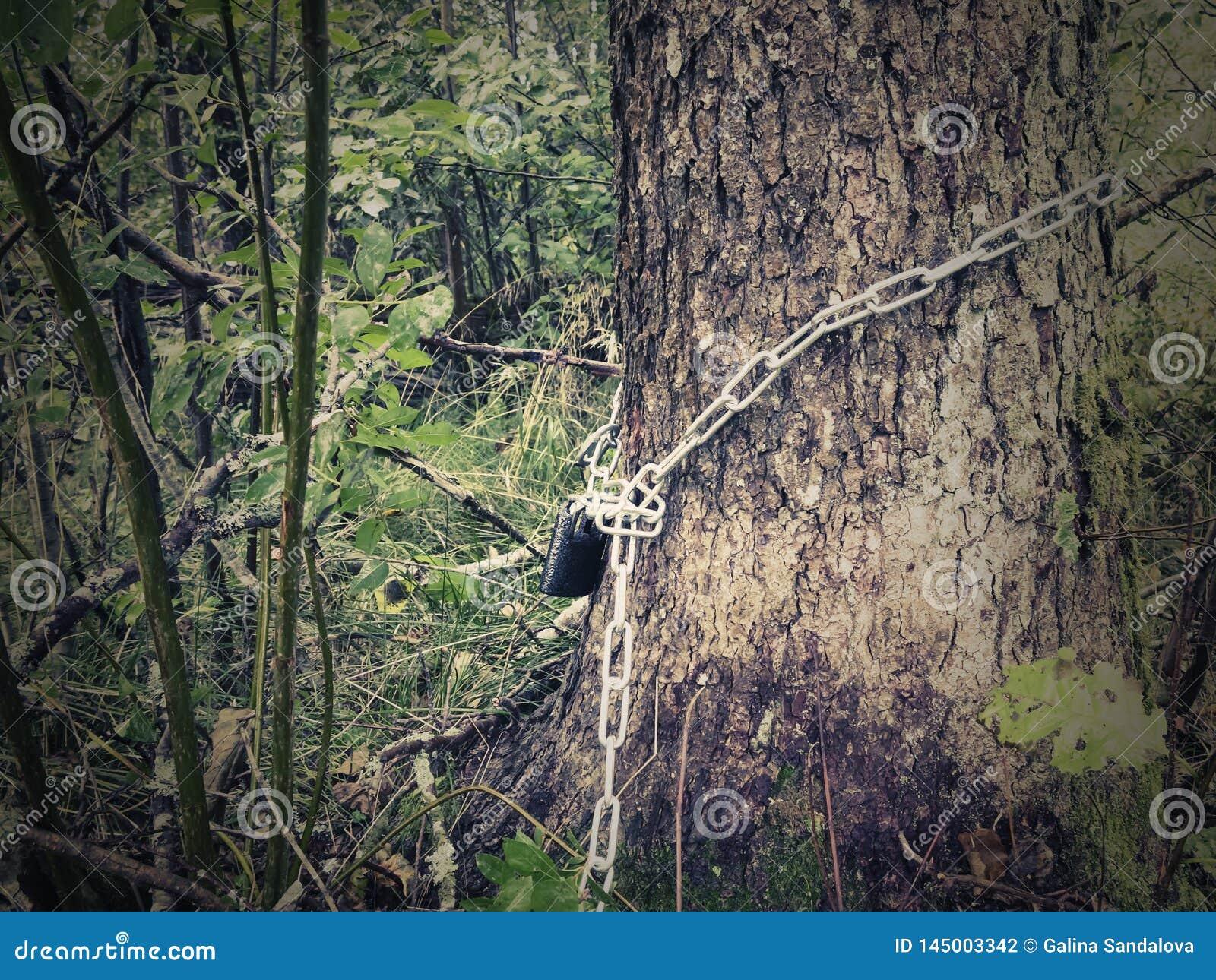 Slåget in runt om en trädstam, är kedjan stängd med en hänglås - begreppet av skyddsskogar och naturen, foto