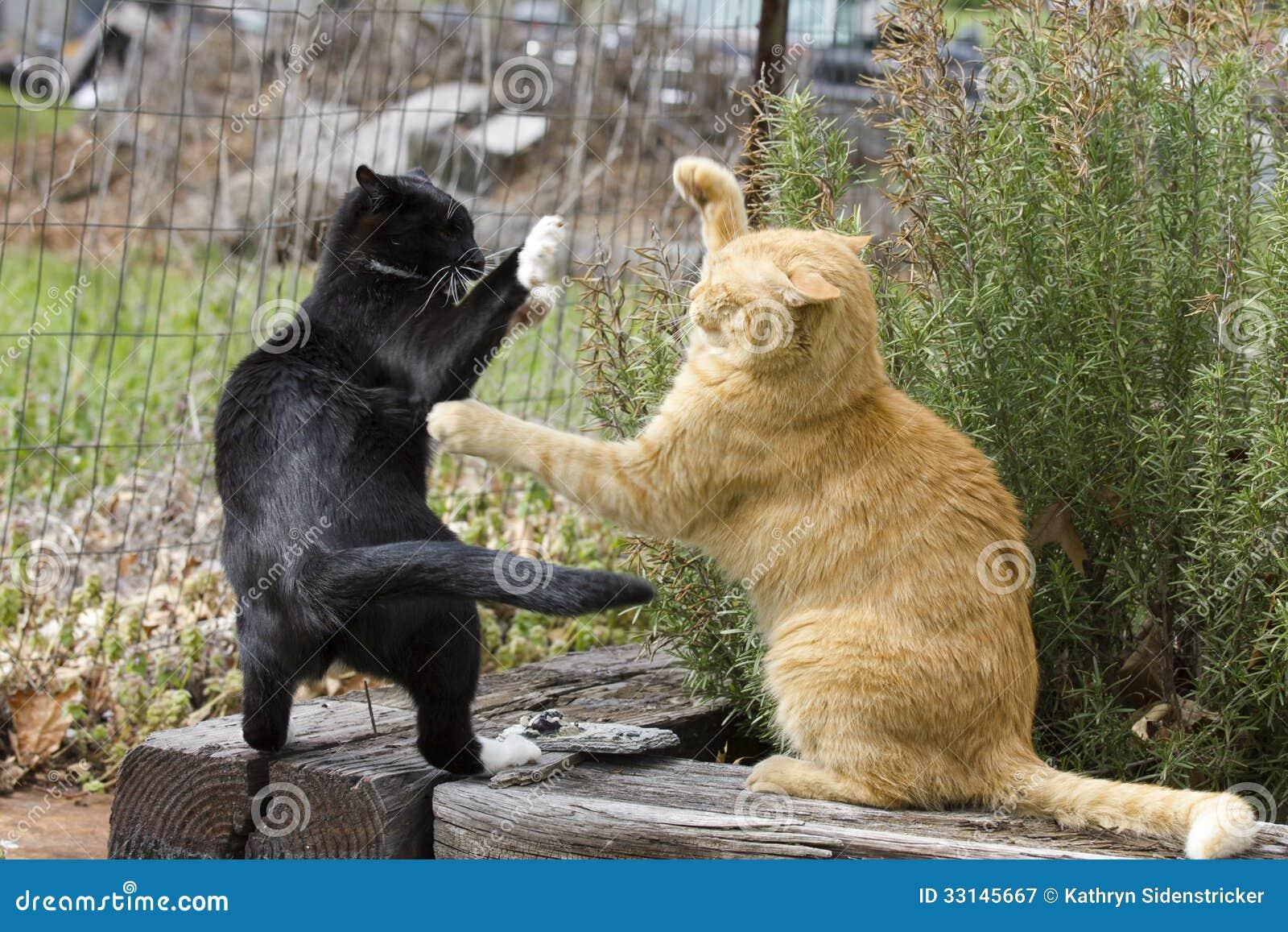 Slåss för två katter