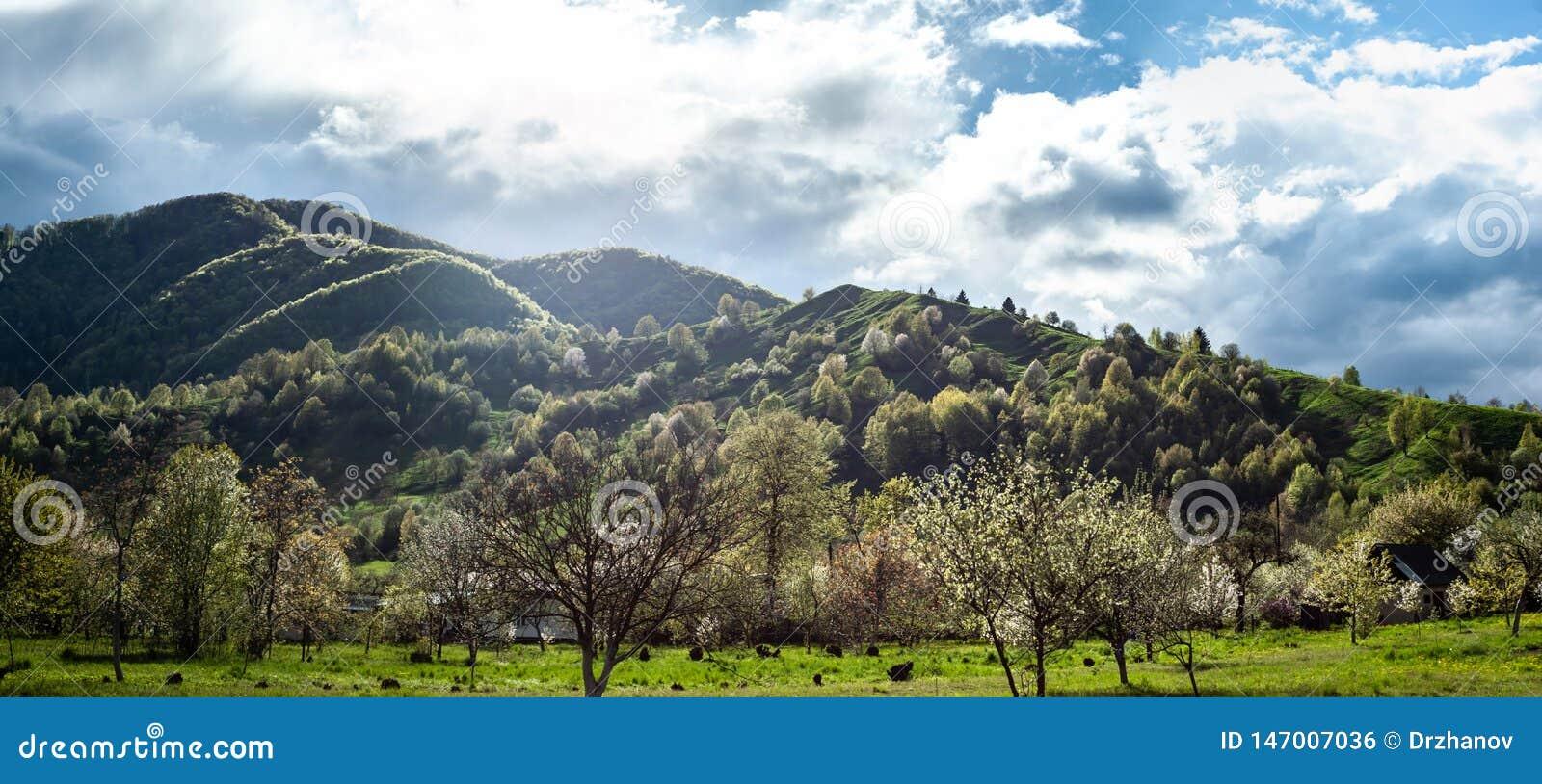 Sl?ende landskap med gr?nt gr?s, kullar och tr?d, soligt v?der, molnig himmel