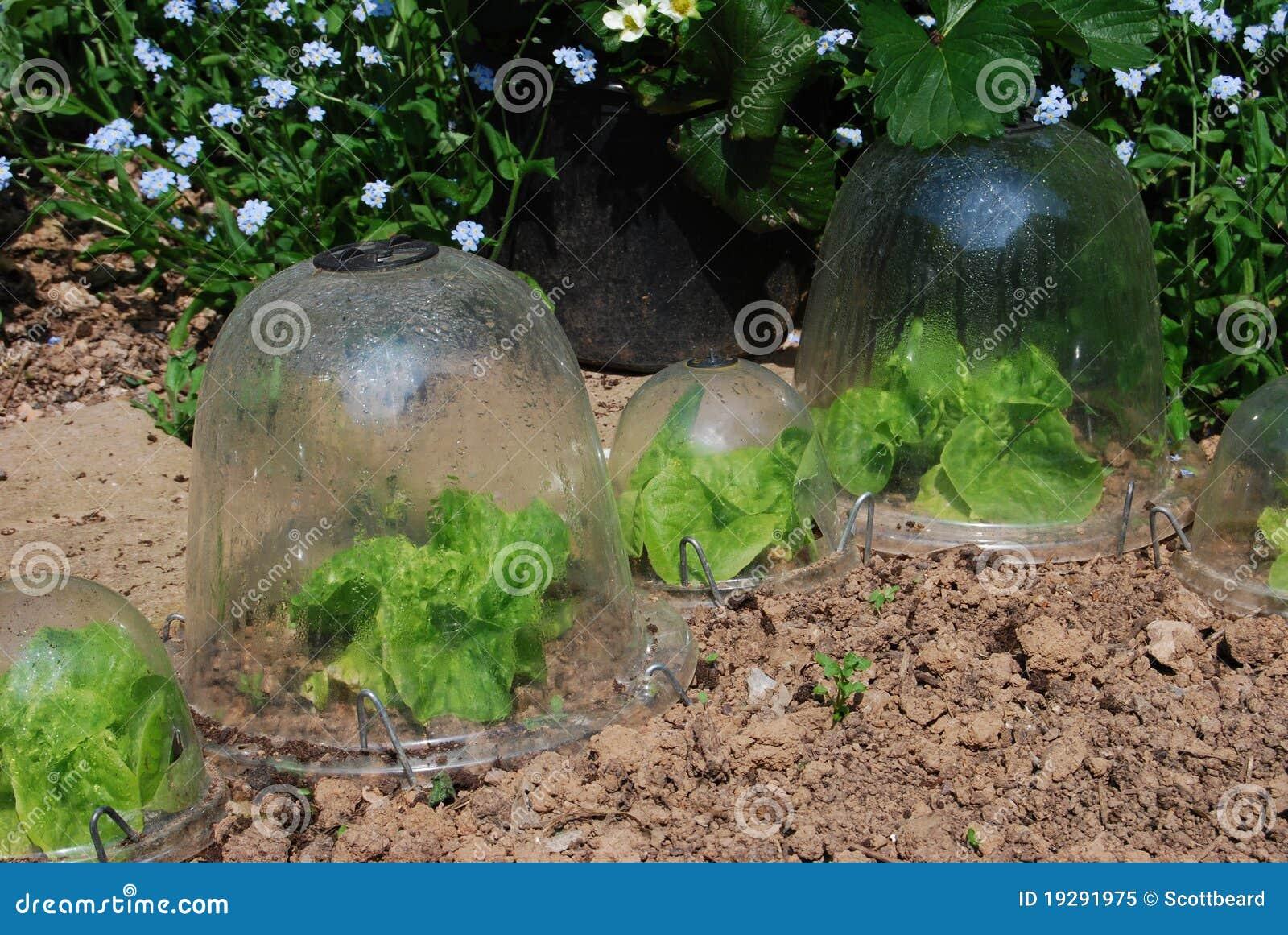 Sla die in tuin plastic stolpen groeien royalty vrije for Plastic kuipstoel tuin