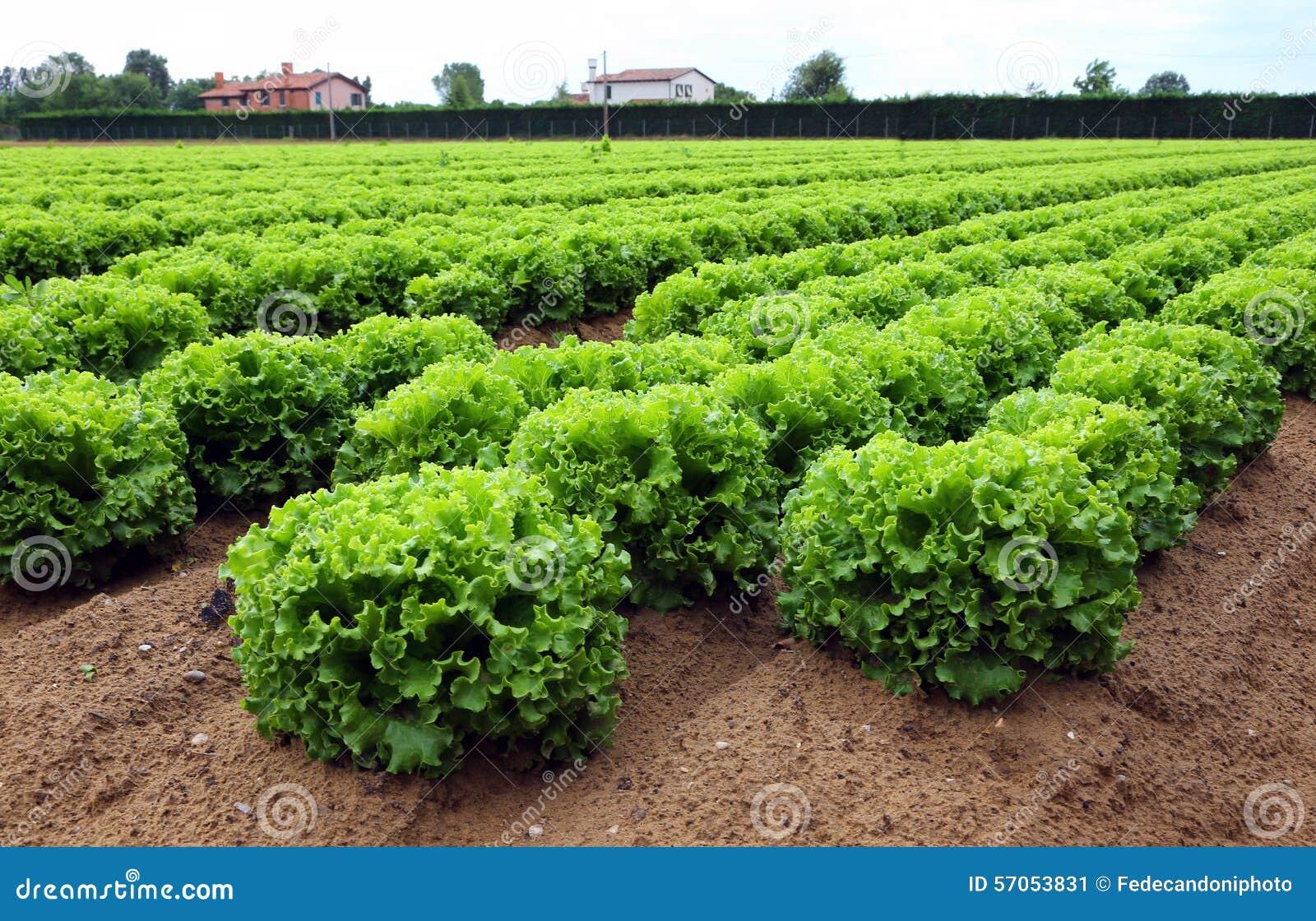 Sla op het reusachtige landbouwgebied