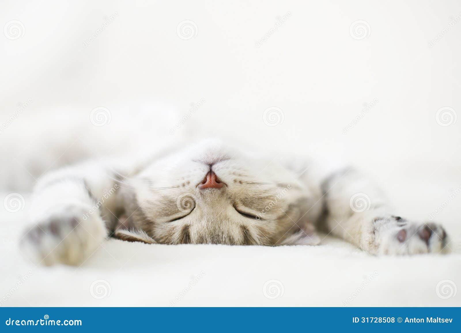 Slaapkat