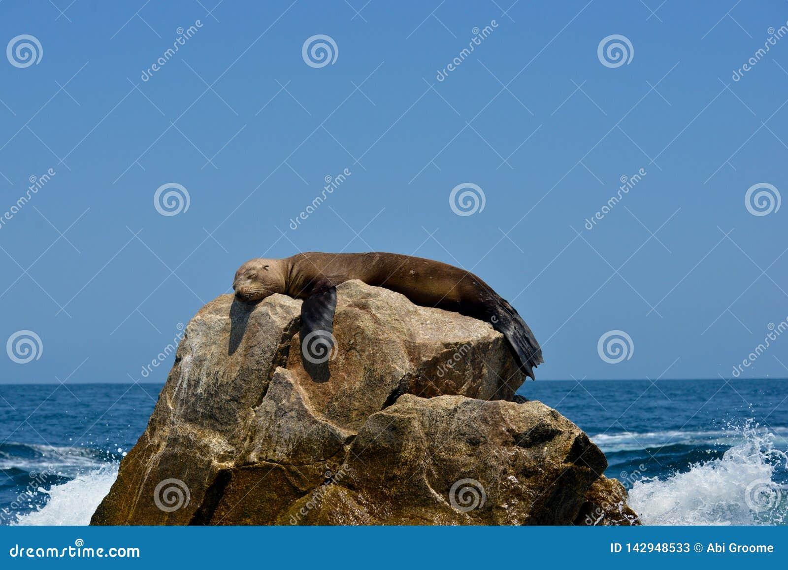 Slaapverbinding op een rots tegen een duidelijke blauwe hemel