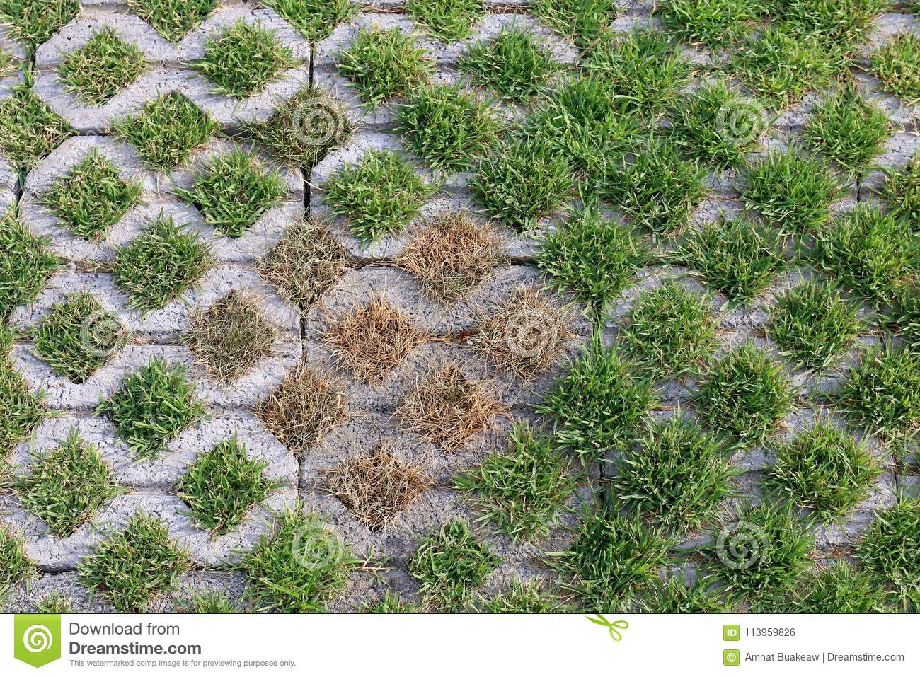 Slab Of Cement Block Floor, Brick Decorative Grass Surface Texture ...