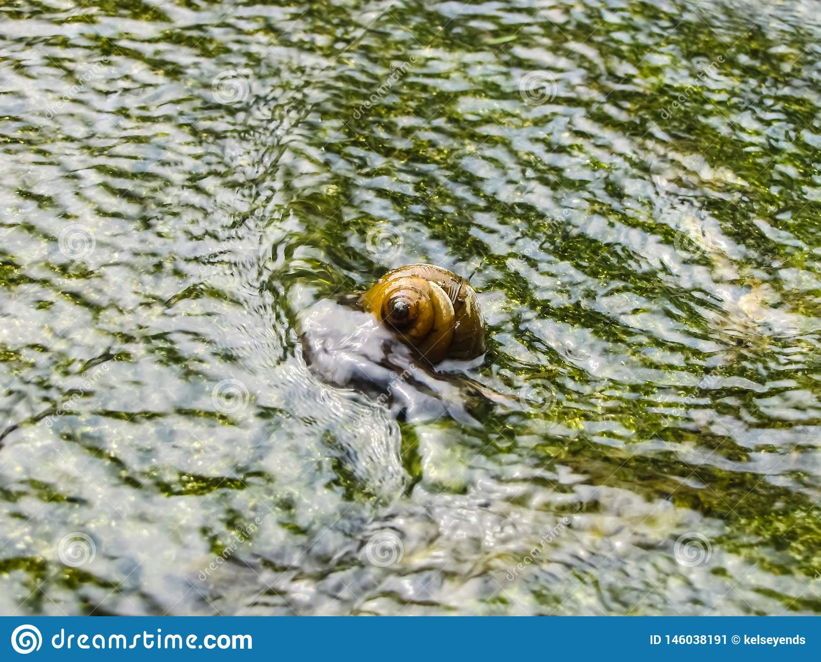 Slak in Bemost Vijverwater