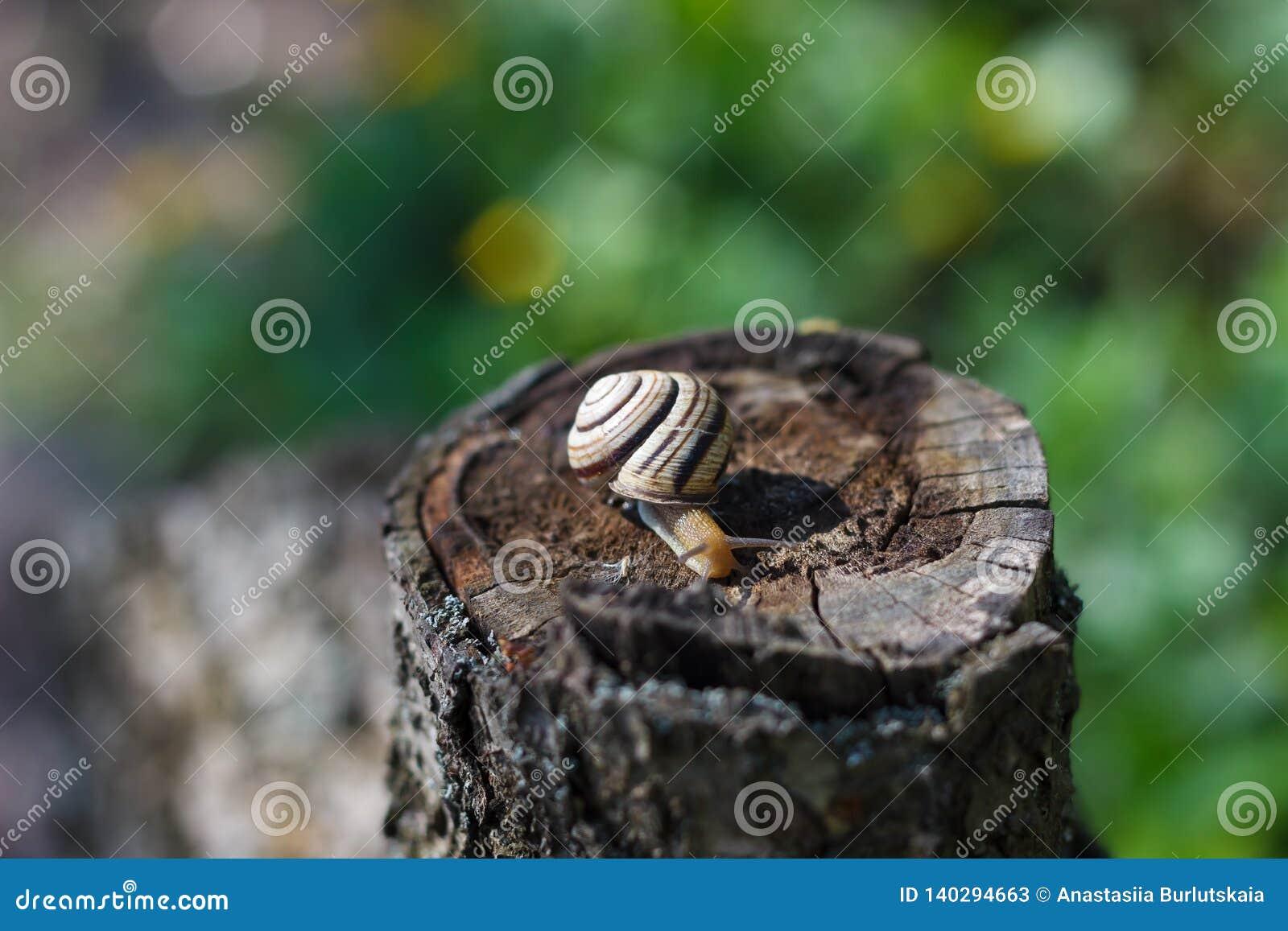 Slak die op een boom of een schors kruipen