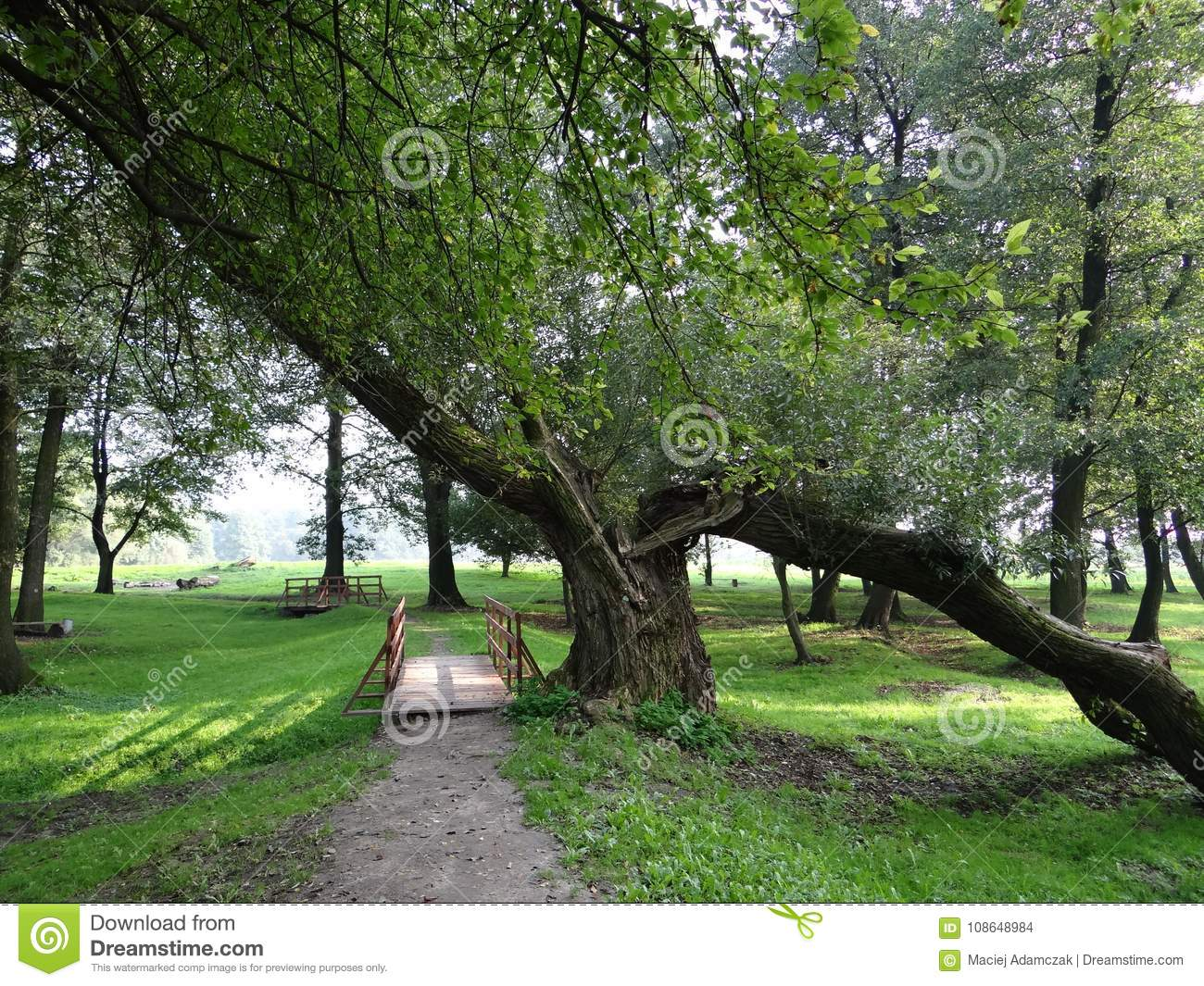 Slanted tree in a green park