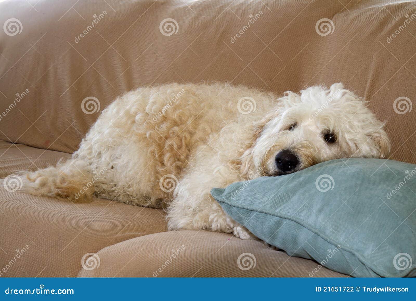 Slaperig Puppy