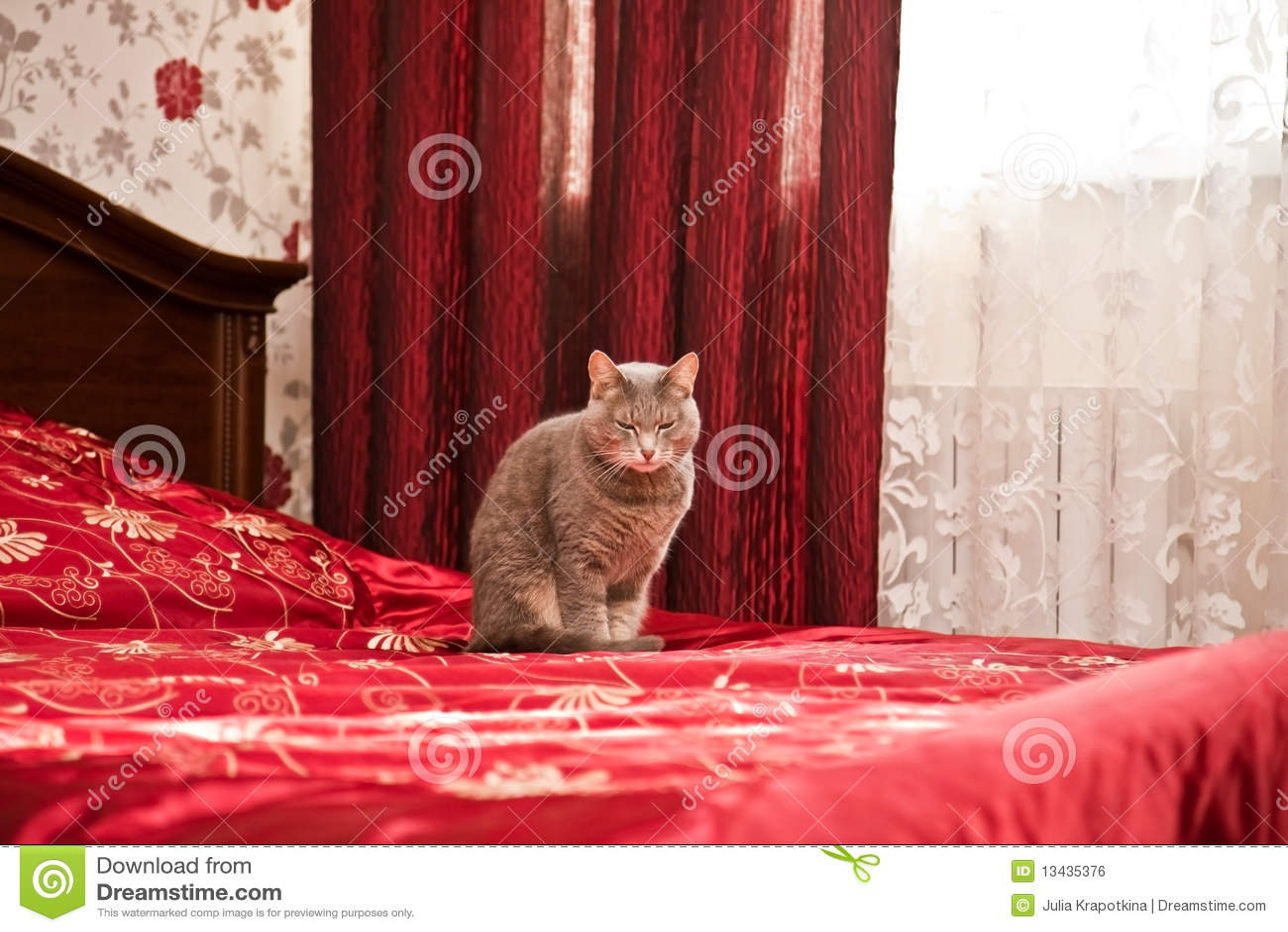 Slaperige grijze kat in slaapkamerbinnenland