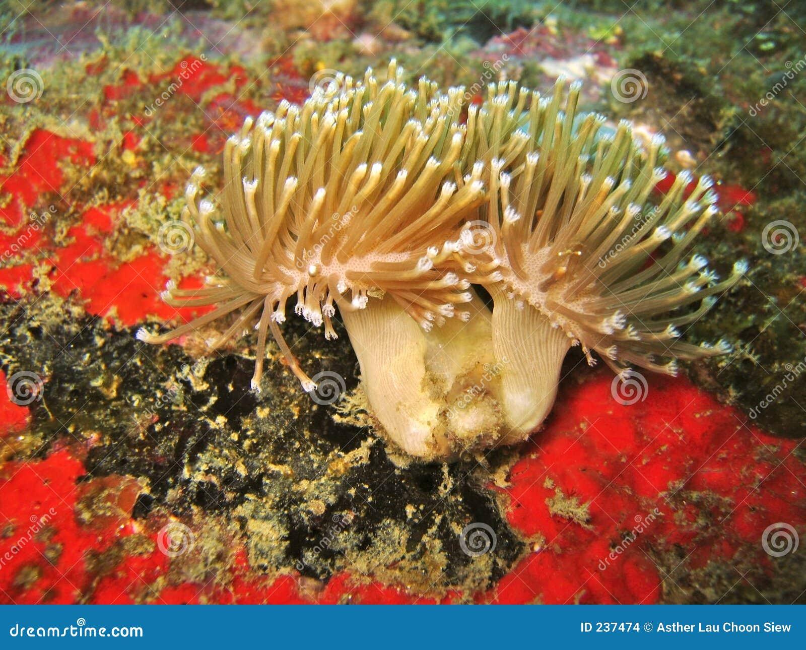 Slapp koralldetaljblomma