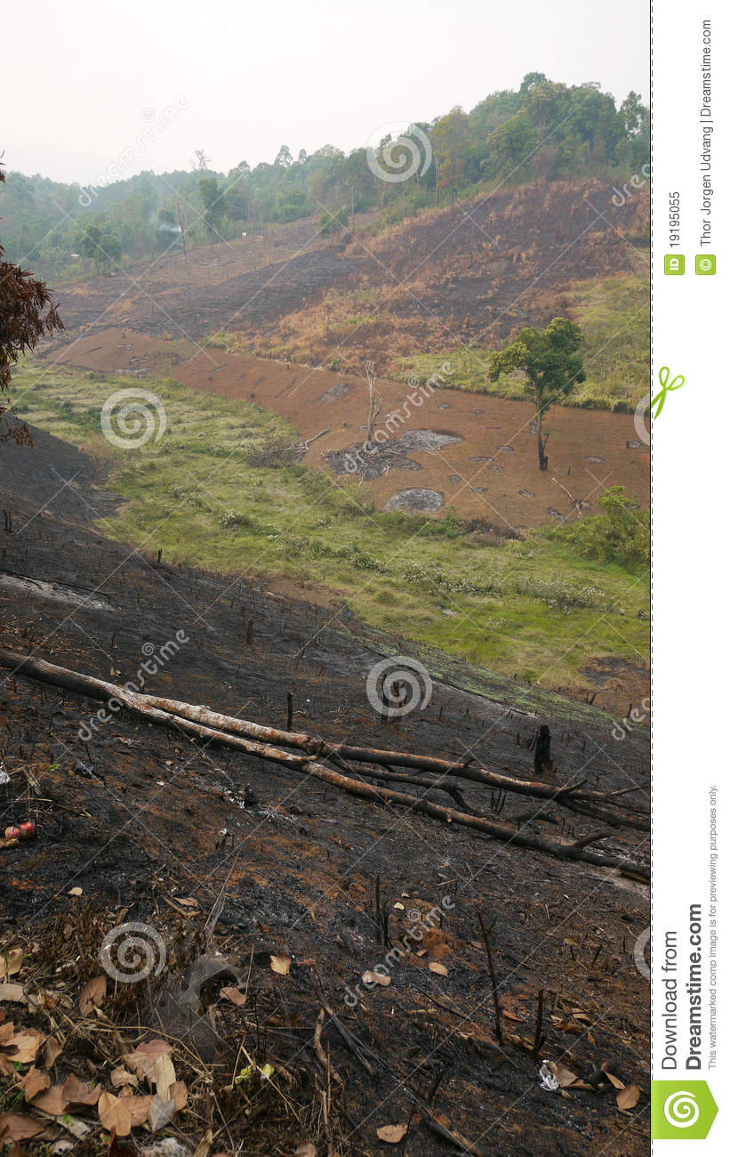 Slash And Burn Agriculture In Thailand Royalty Free Stock ...