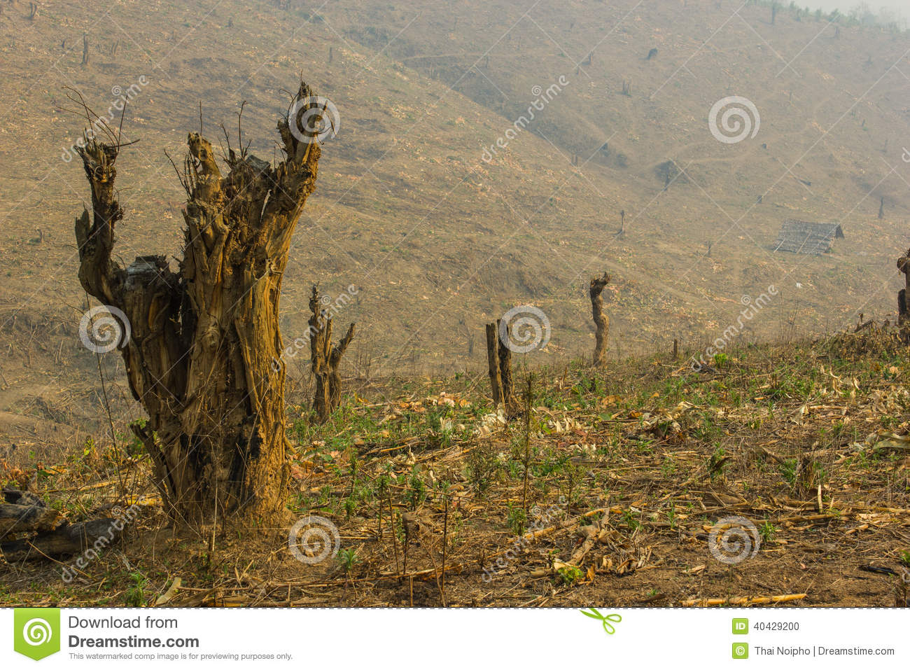 Slash And Burn Cultivation Royalty-Free Stock Image ...