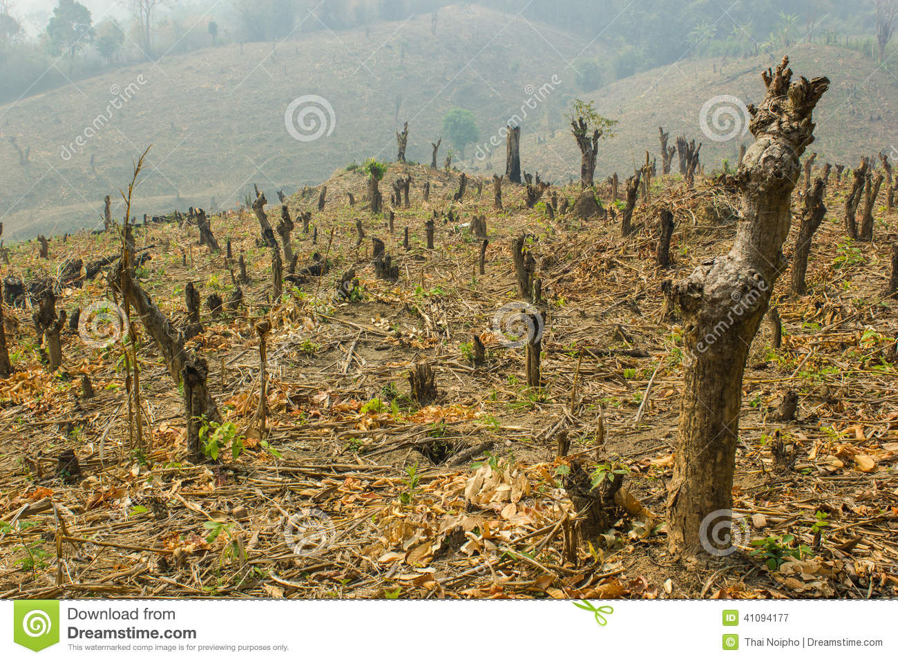 Slash And Burn Cultivation Stock Photo | CartoonDealer.com ...