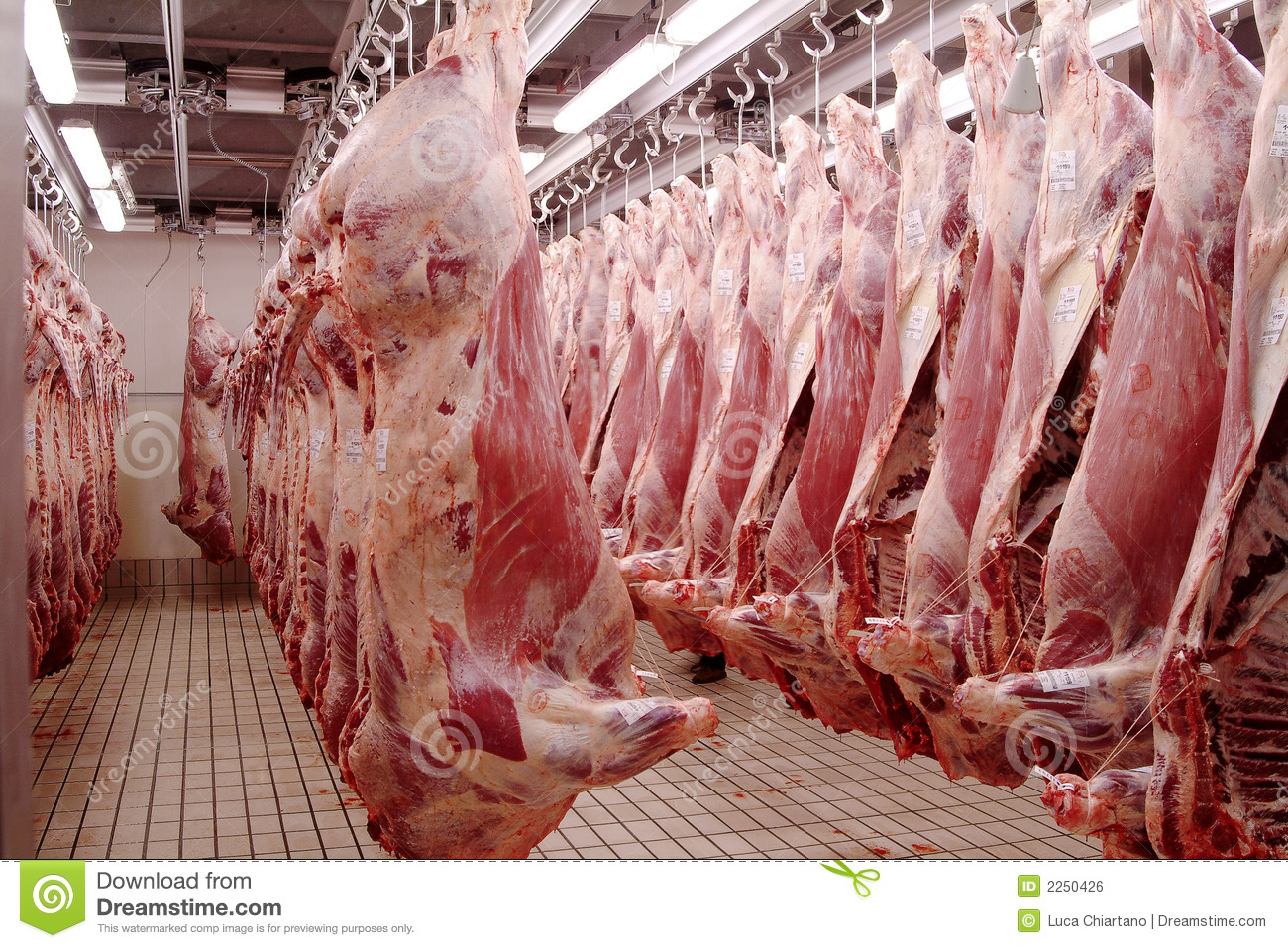 Slaughter house Macelleria Royalty Free Stock Image Image 2250426
