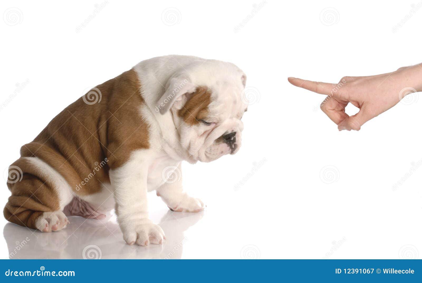 Slechte hond