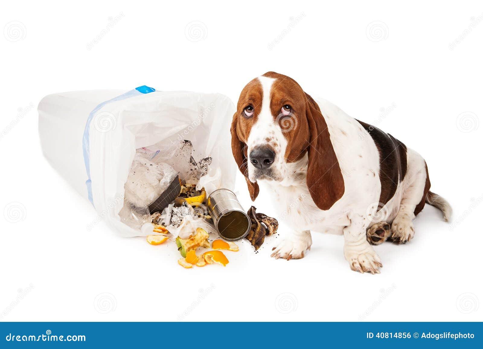 Slechte Hond die in Huisvuil krijgen