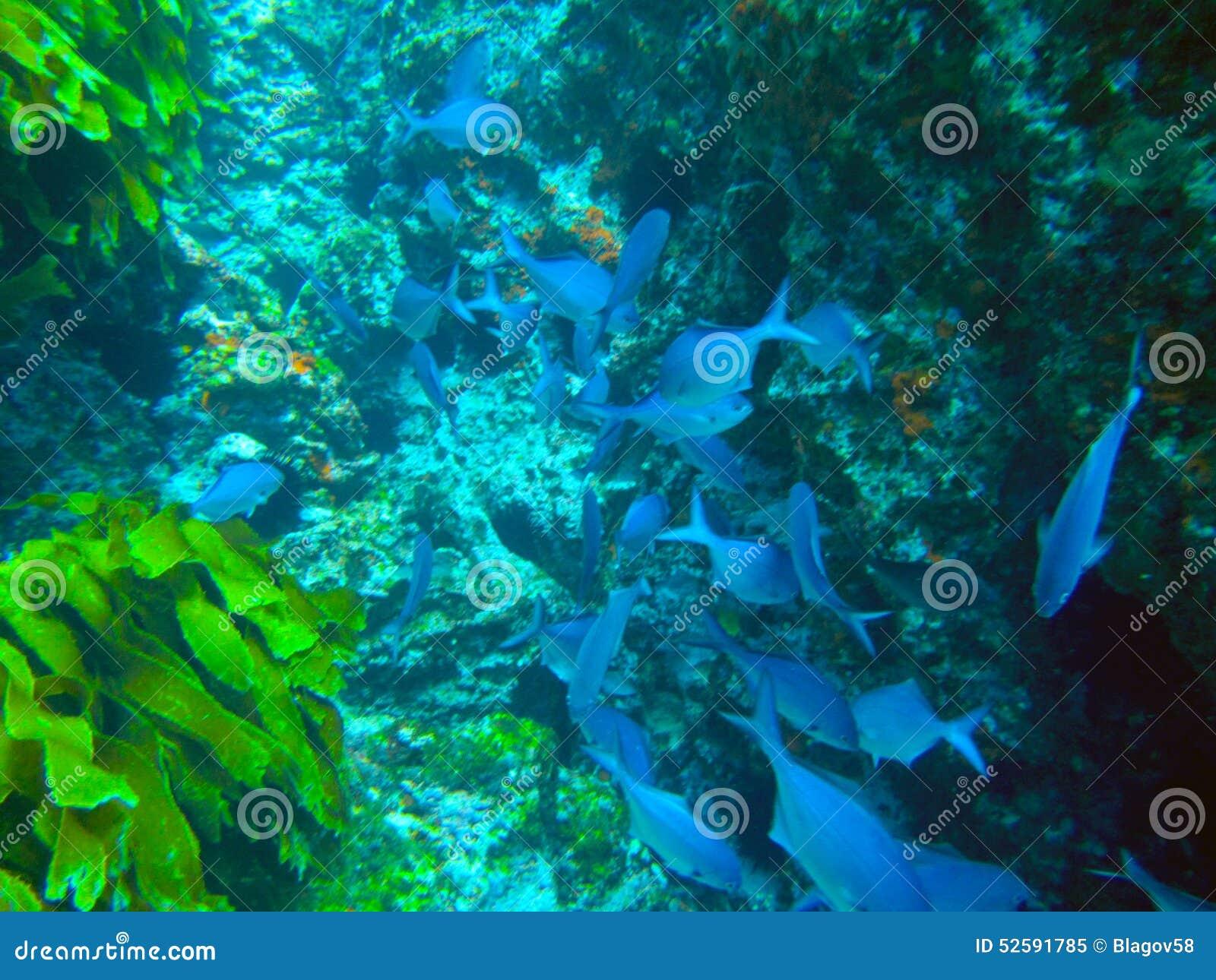 Slechte Ridderseilanden Marine Reserve onderwater
