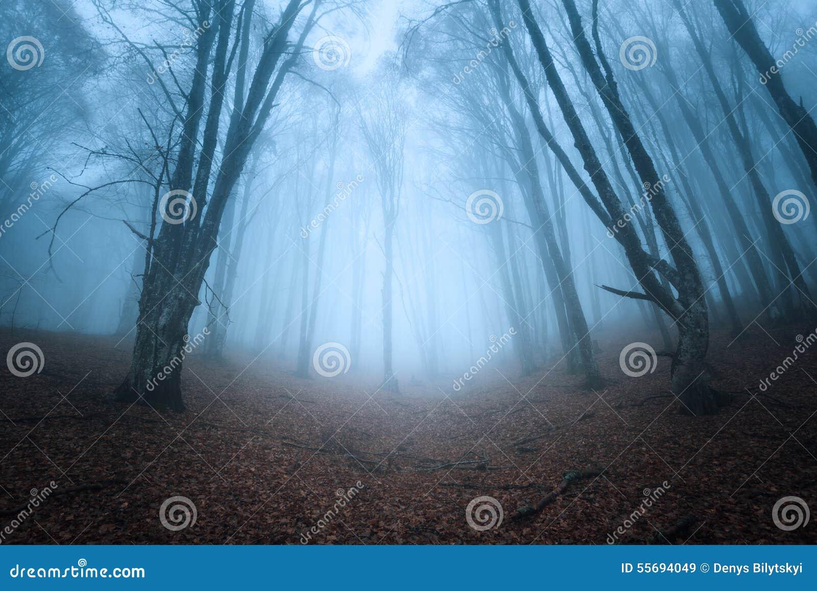 Sleep door een geheimzinnig donker oud bos in mist De herfst