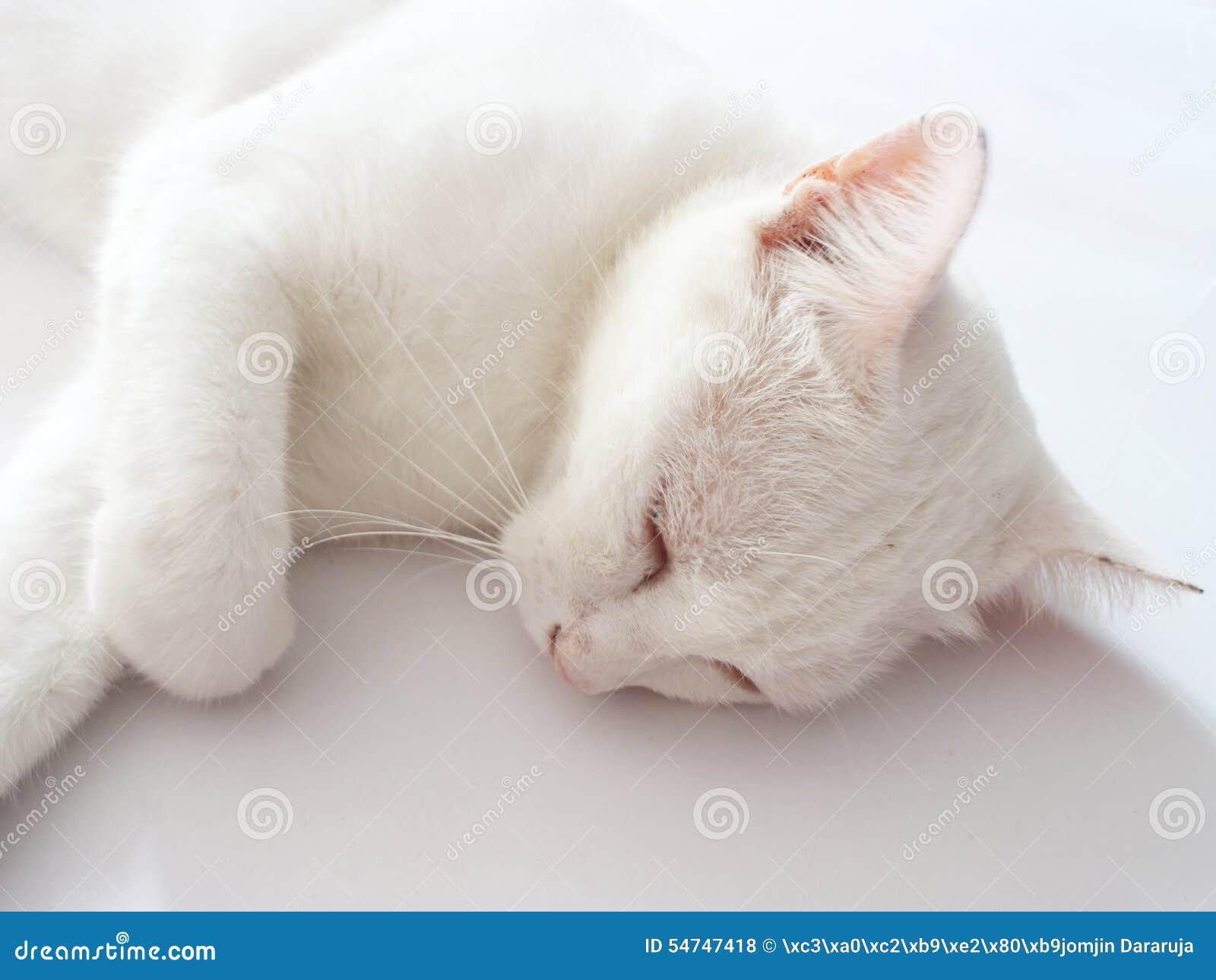 cheshire cat alice