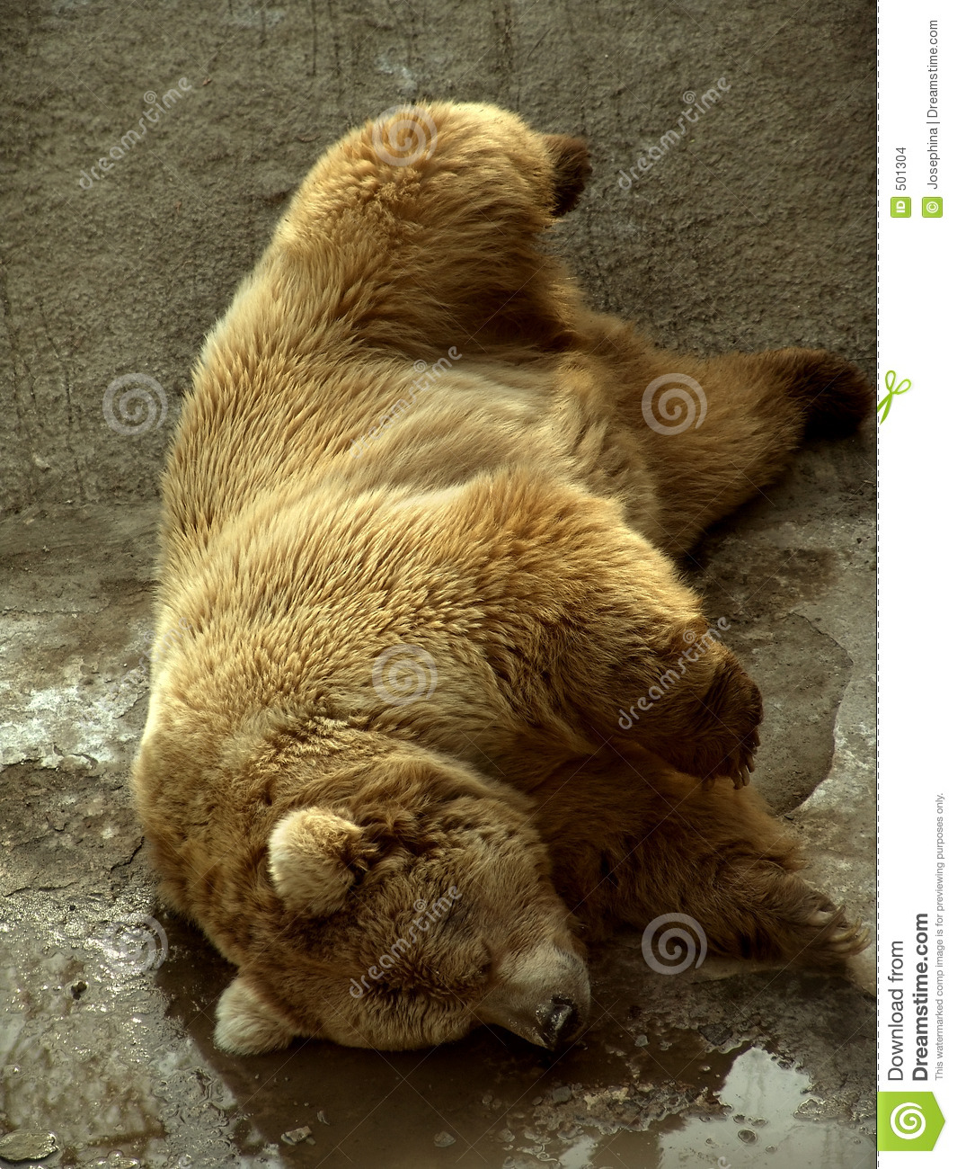Sleeping Bear Stock Images Image 501304