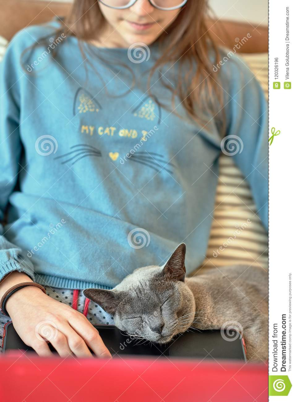 A sleeping British cat in the hands of a busy housewife