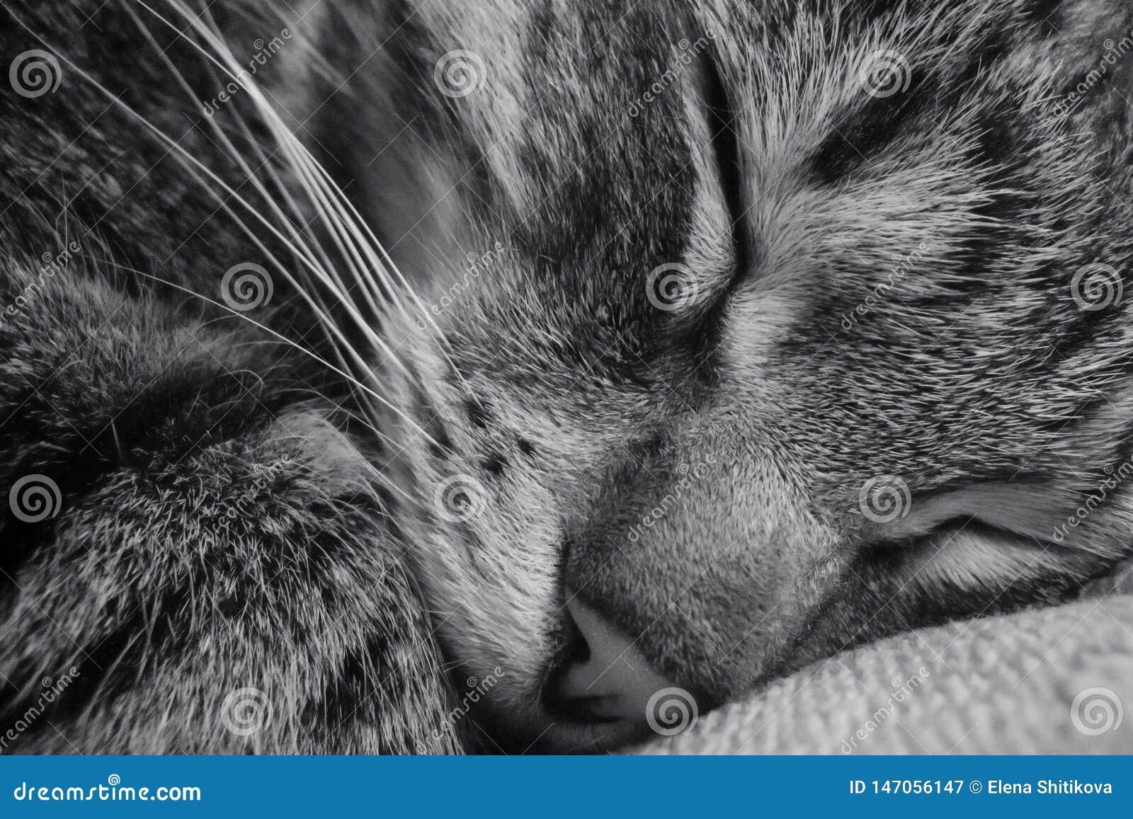 Sleeping cat. Close-up