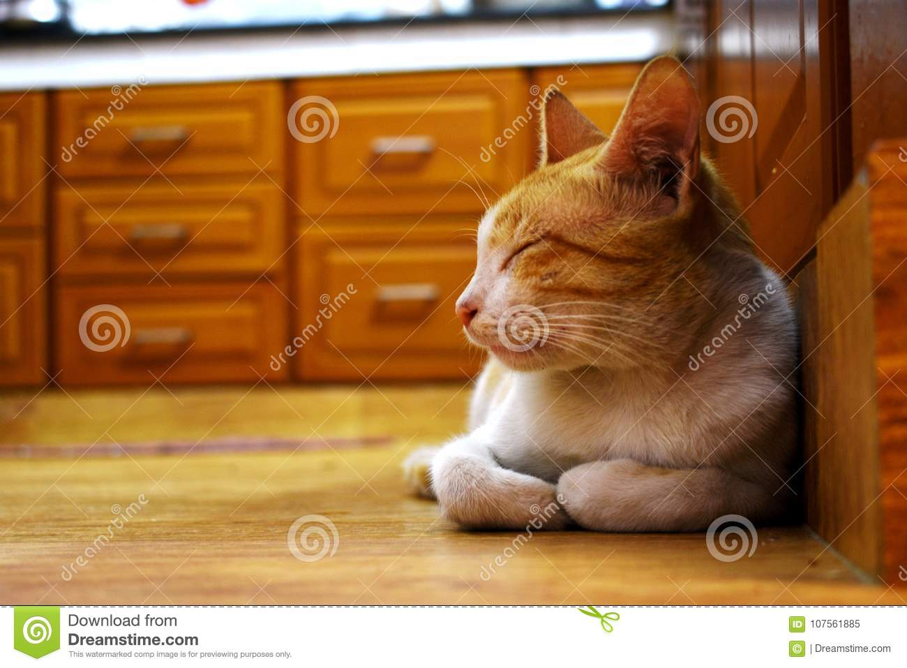 Sleeping Cat In The Kitchen Stock Image Image Of Yoga