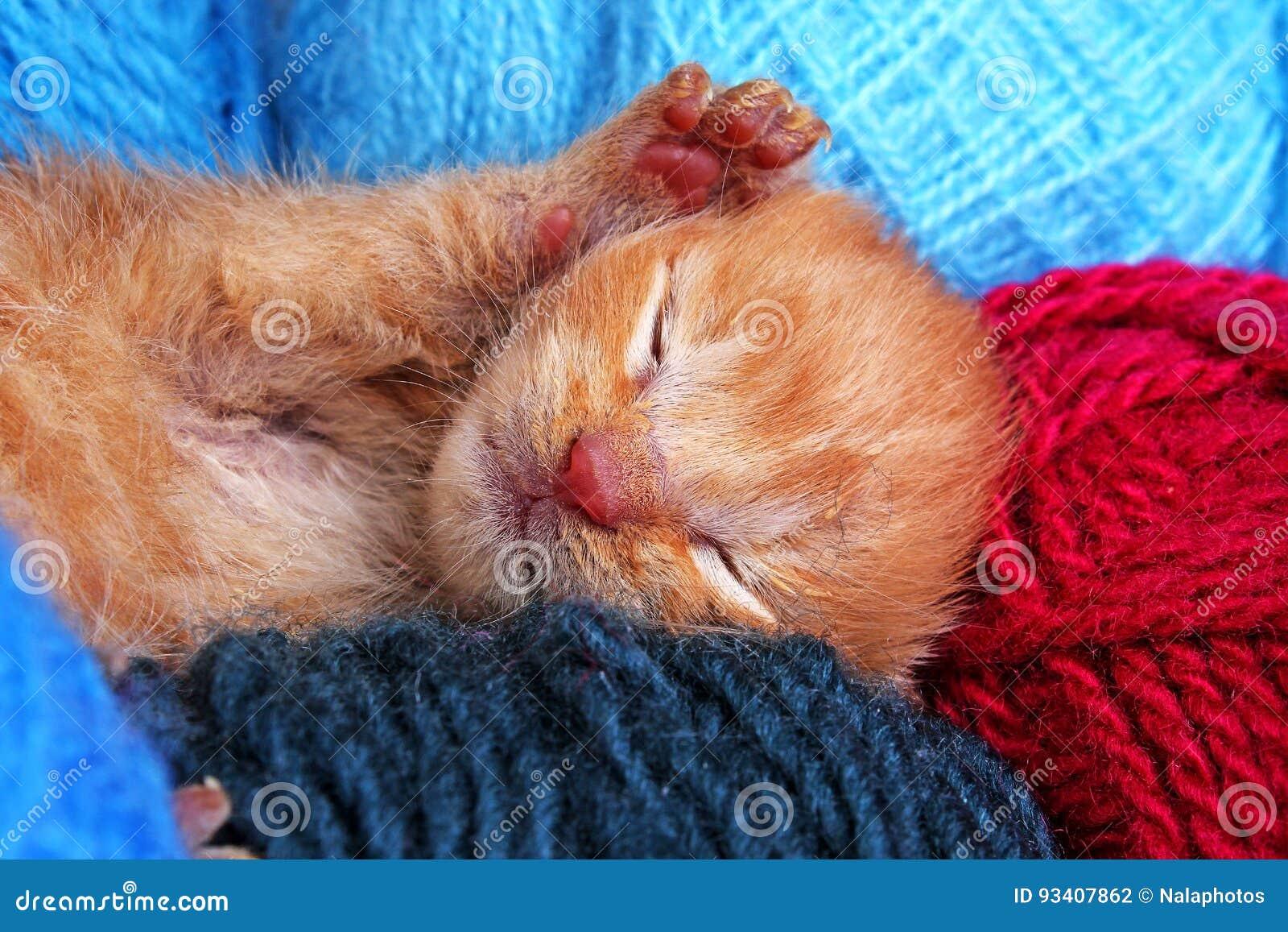 Sleeping Cat Kitten New Born Baby Cat Sleeping Cute Beautiful Little Few Days Old Orange Cream Color Kitten Stock Photo Image Of Sleeping Photo 93407862