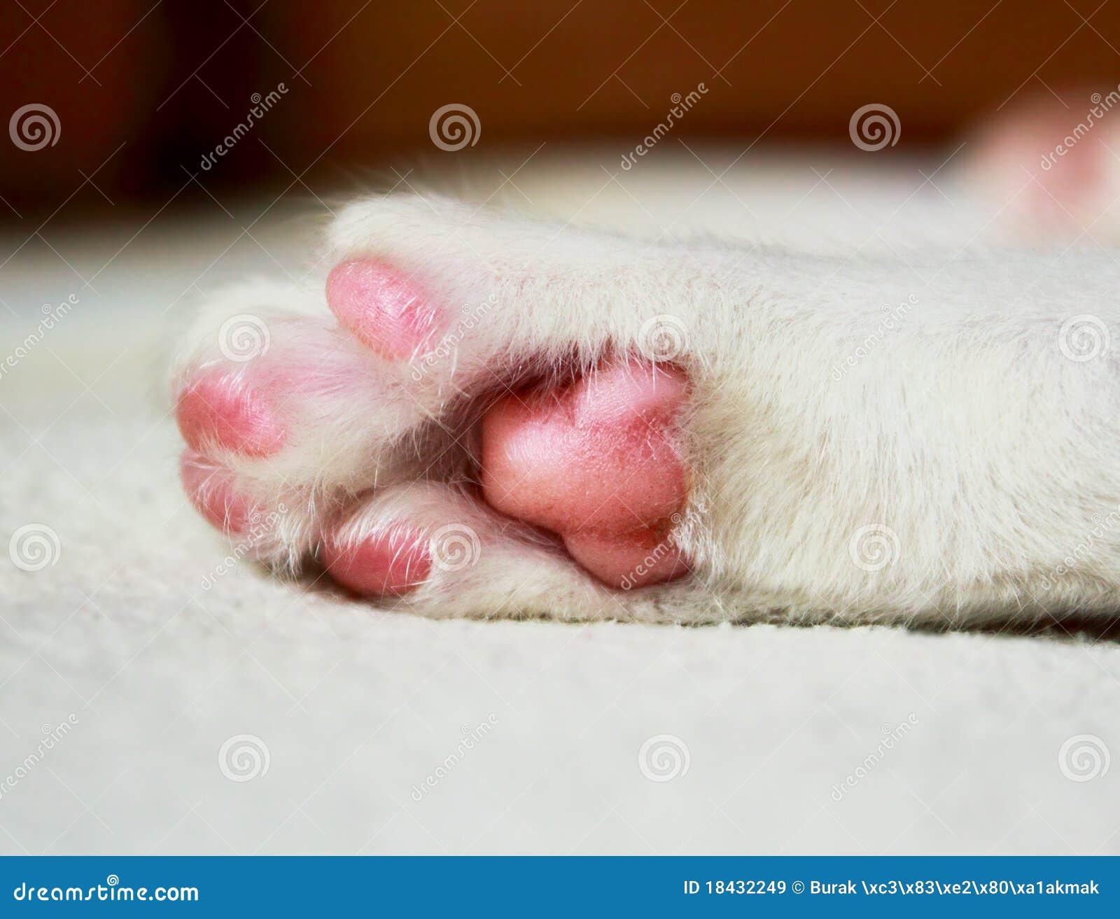 Sleeping cat paw