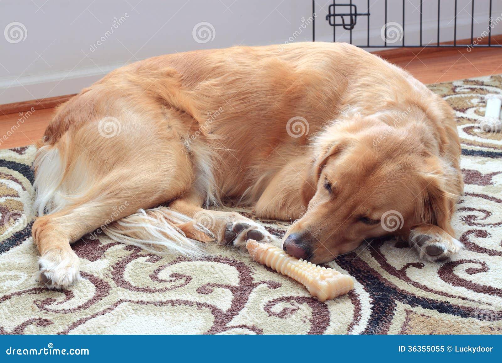 Sleeping Dog Royalty Free Stock Photo Image 36355055