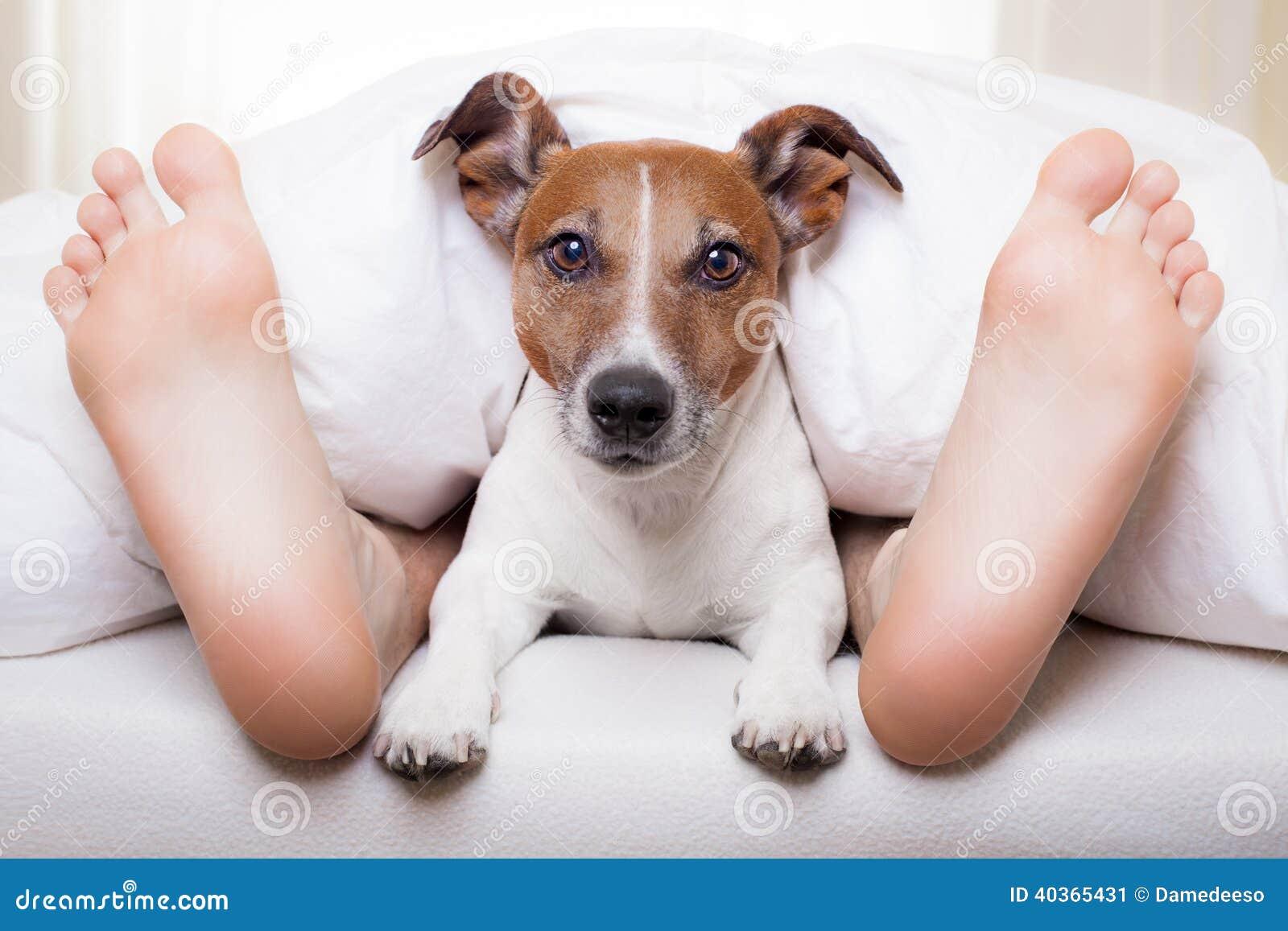 Dog Training Unlimited
