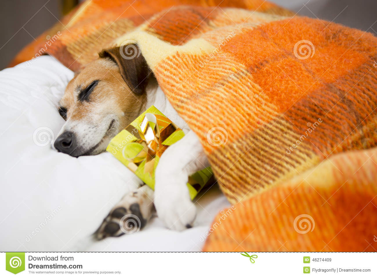 Do It Yourself Home Design: Sleeping Dog With Present Box Gift Stock Photo