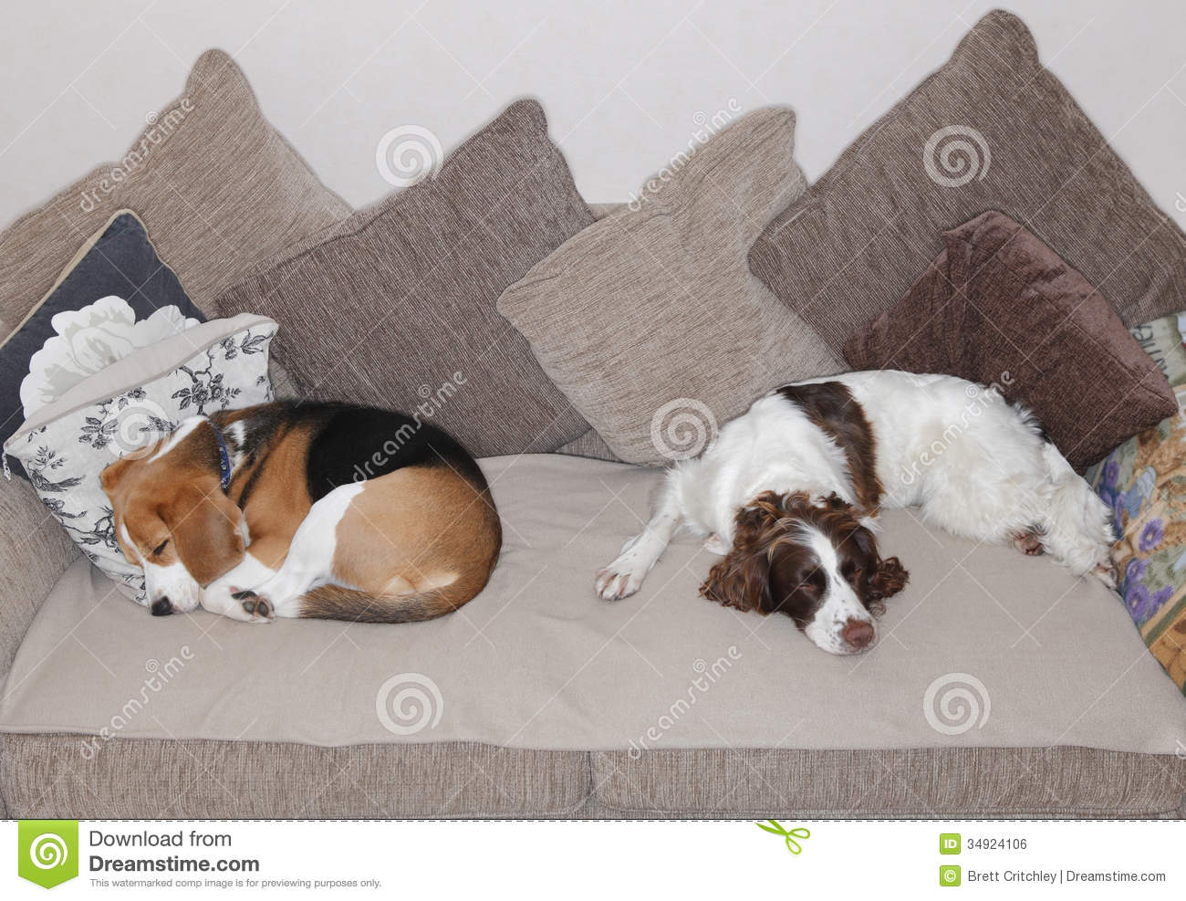 Sleeping Dogs Stock Photo Image Of Cushions Dogs