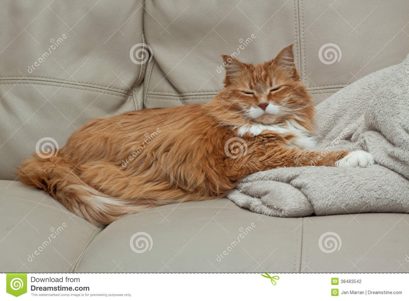 Sleeping Ginger Tabby Cat Stock Photo Image Of Blanket