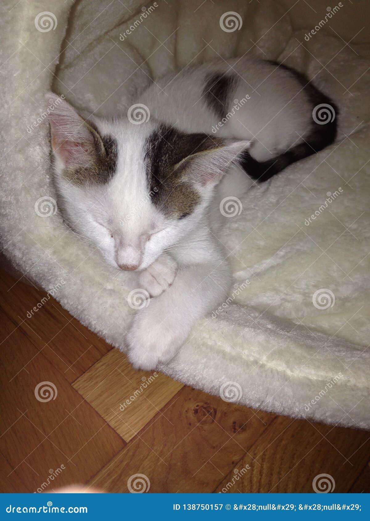Sleeping kitten 2.0