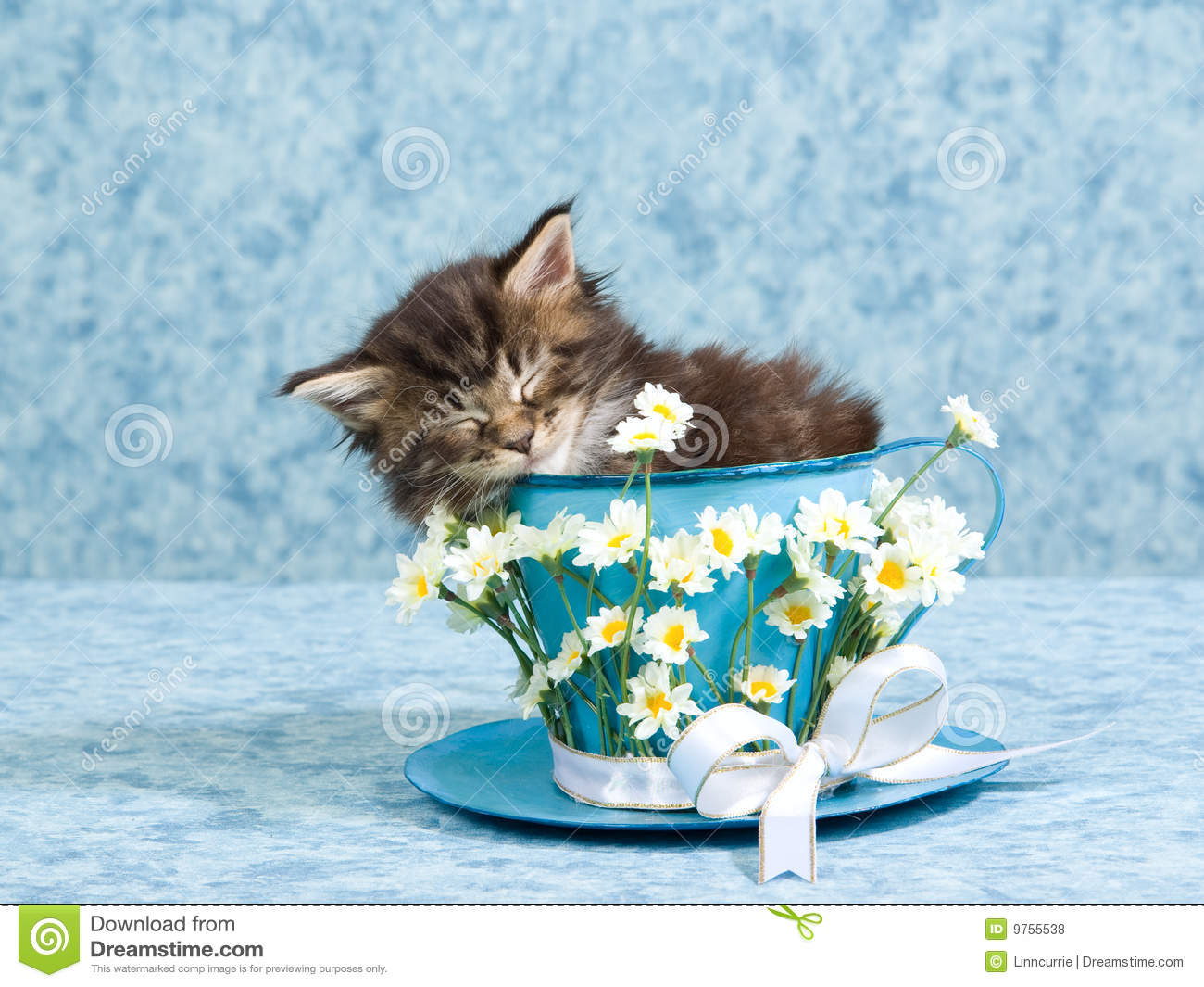 sleeping maine coon kitten in large tea cup royalty free Different Clip Art Kittens clipart pictures of kittens