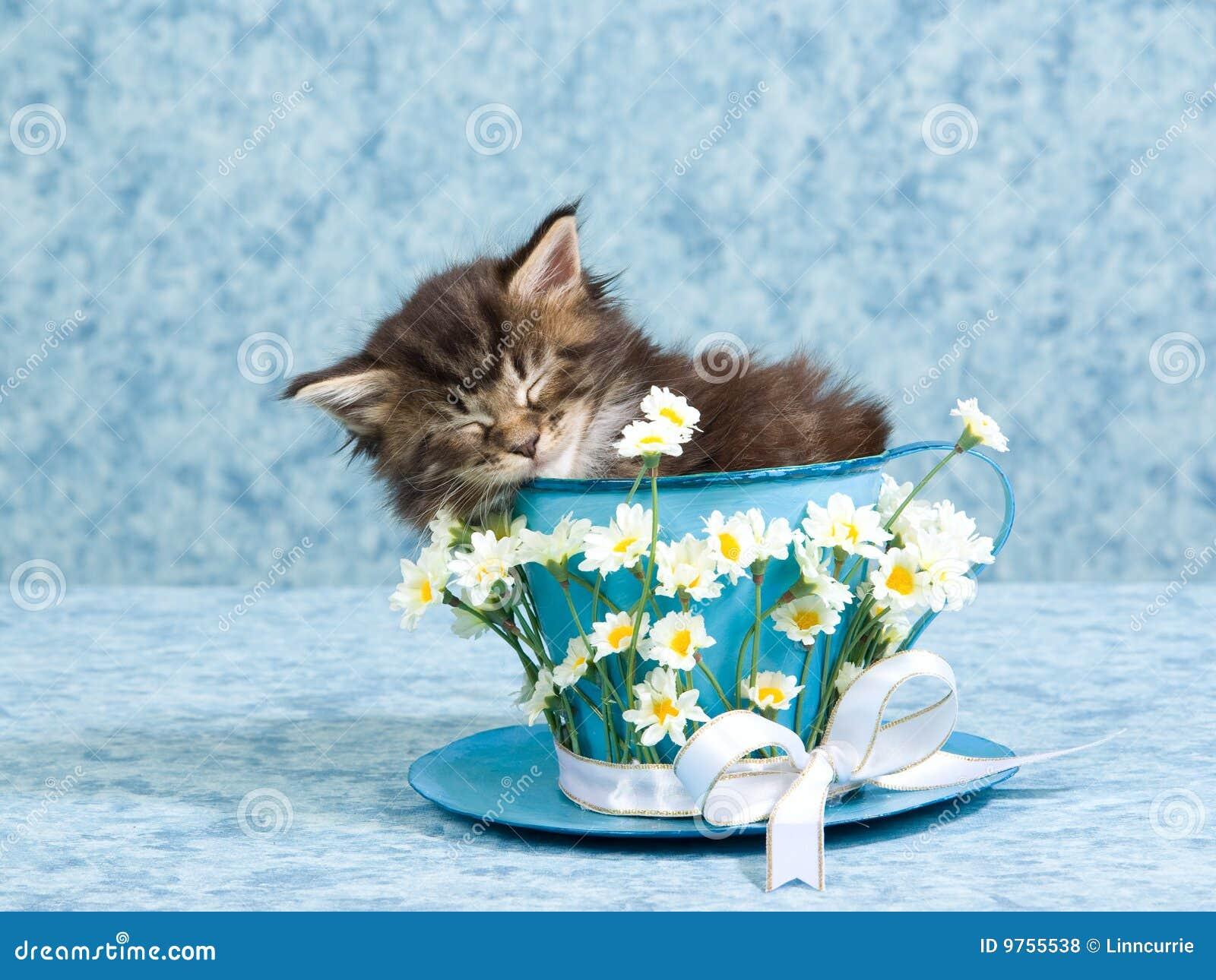 sleeping maine coon kitten in large tea cup royalty free Teddy Bear Outline Vector Teddy Bear Vector Graphics