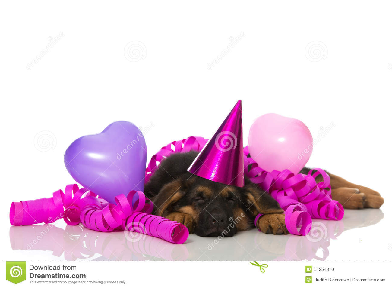 Sleeping Party Puppy Stock Photo Image Of Tired Dreaming 51254810