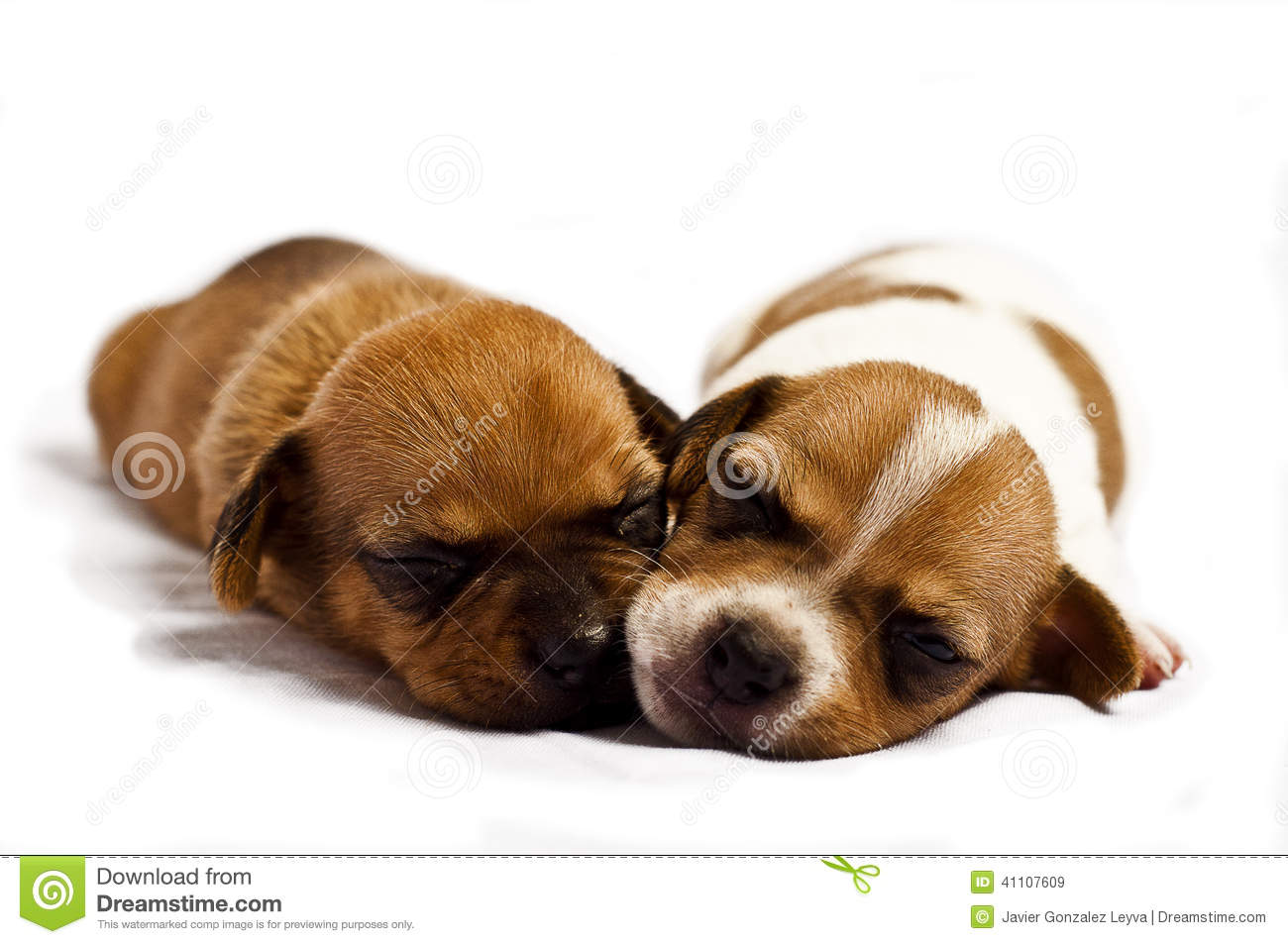 sleeping puppies stock image. image of calm, cute, puppy - 41107609