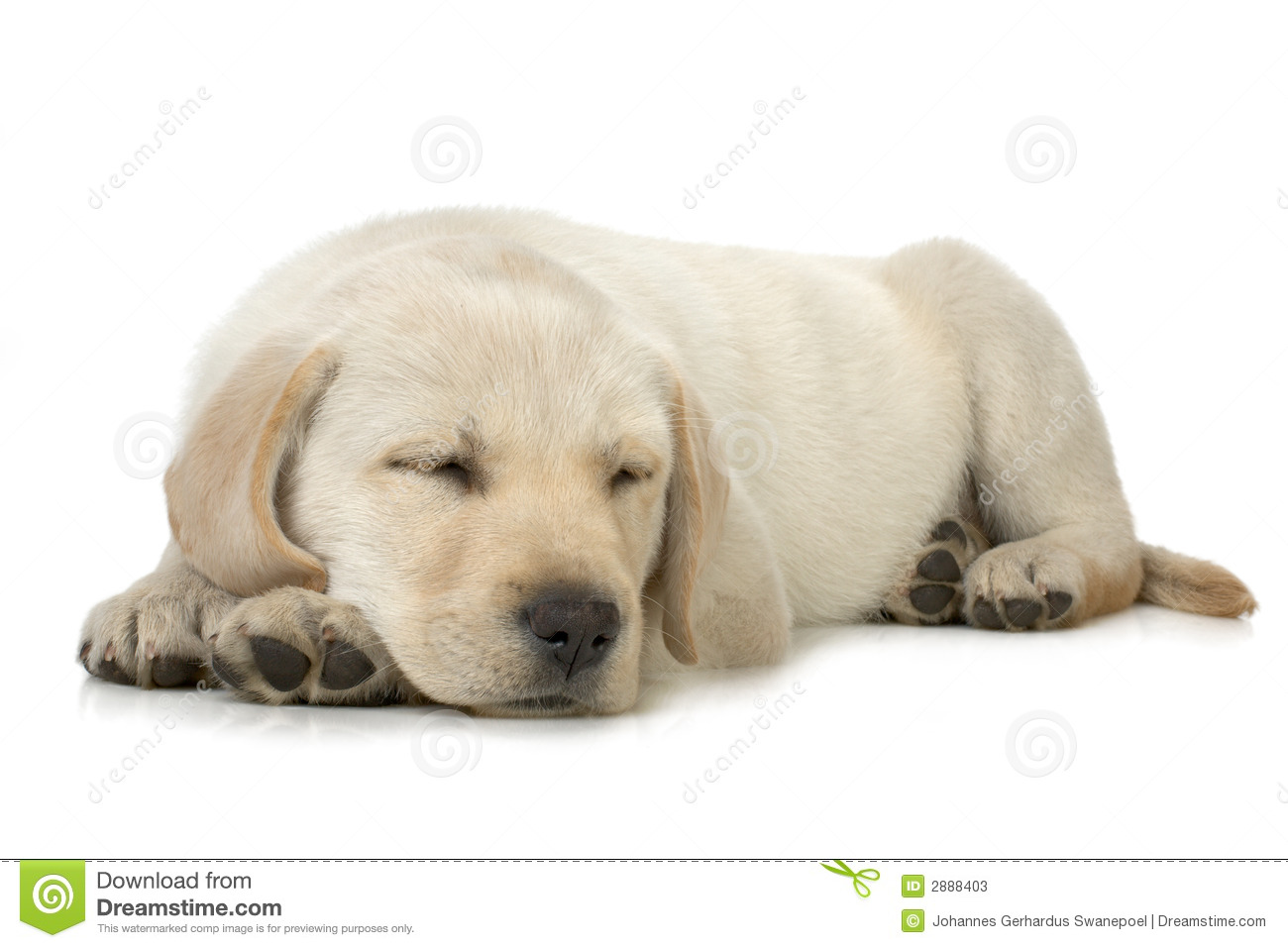 Cartoon dog stock photos images amp pictures shutterstock - Sleepy White Dog Stock Photos Images Amp Pictures Shutterstock Cartoon