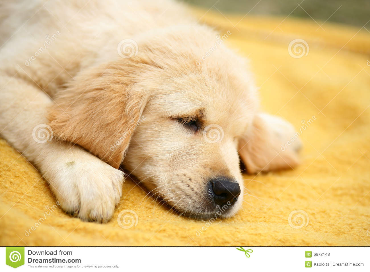 Image Result For Puppy Dog Backgrounda
