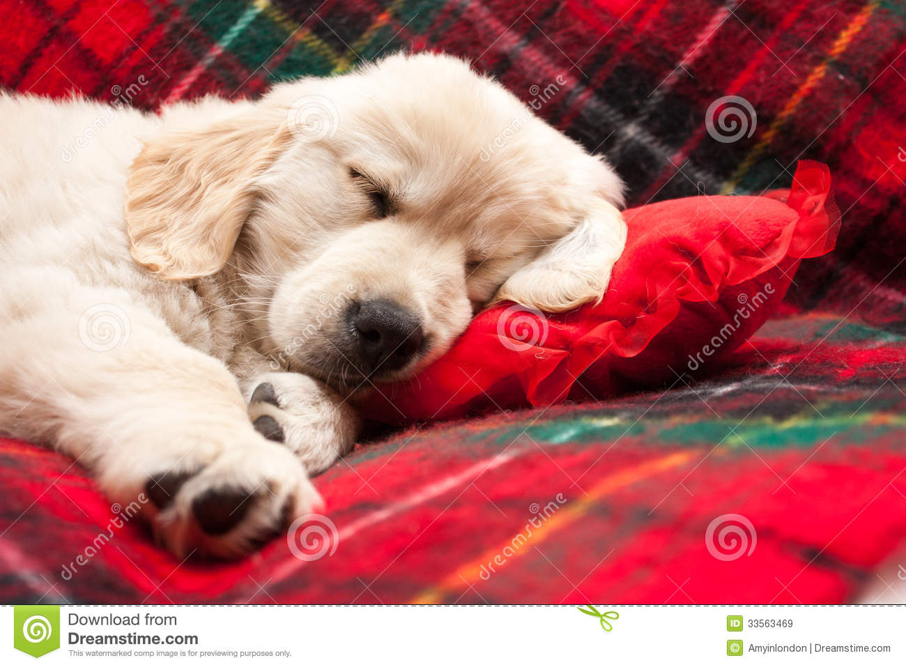 Sleeping Puppy On Plaid Stock Image Image Of Friend