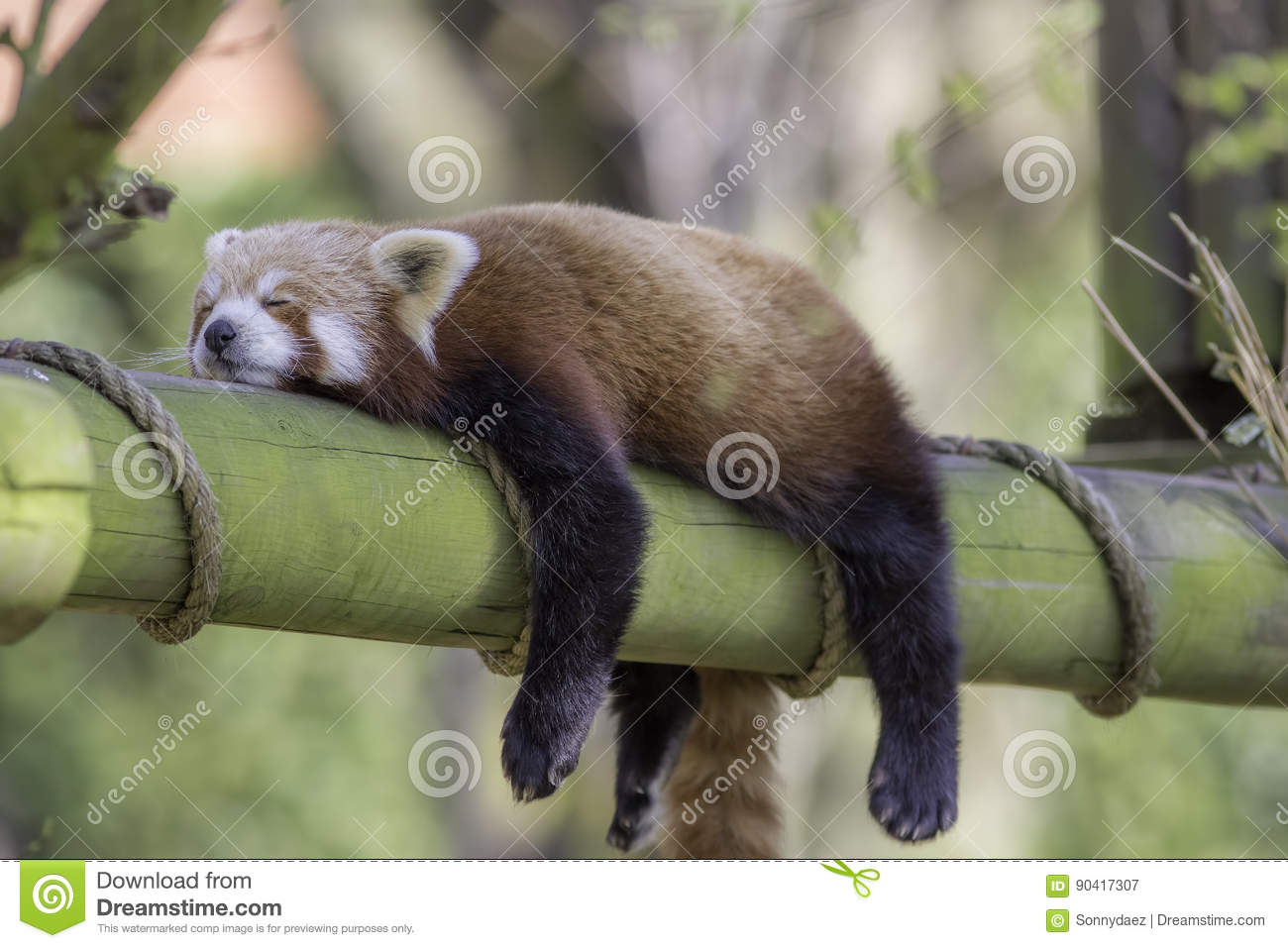 Panda Stock Photos - Download 11,680 Images