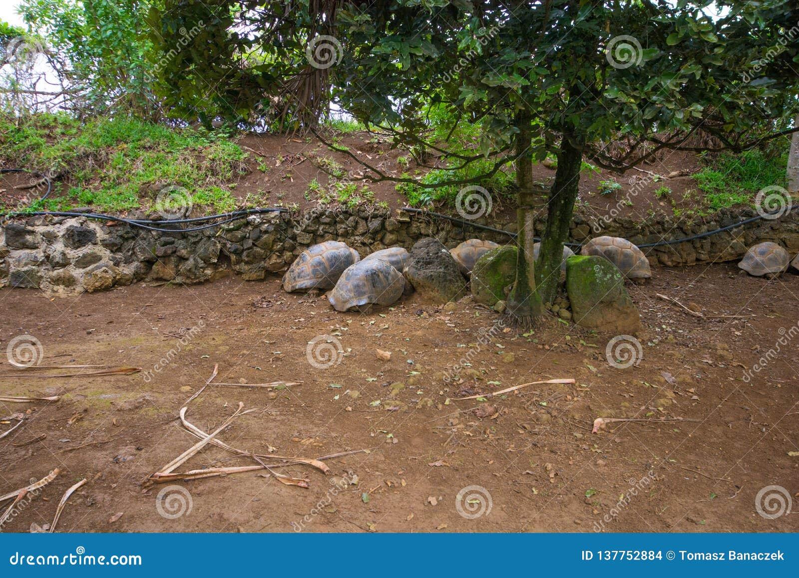 Sleeping turtles in La Vanille natural park, Mauritius