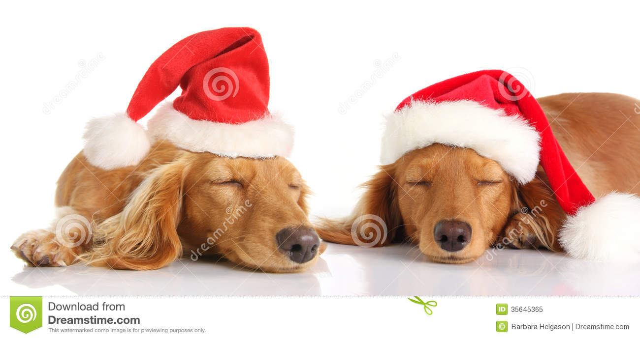 free christmas clip art with dogs - photo #48