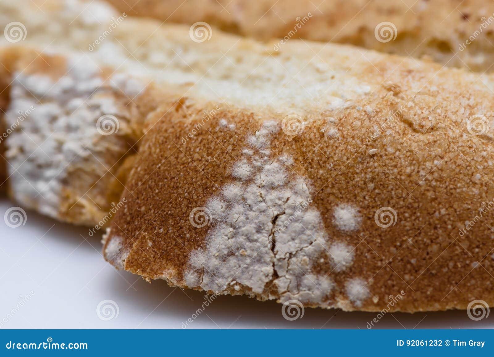 Slice Of Bread Stacked With White Mold Macro Stock Photo Image Of Cake Macro 92061232