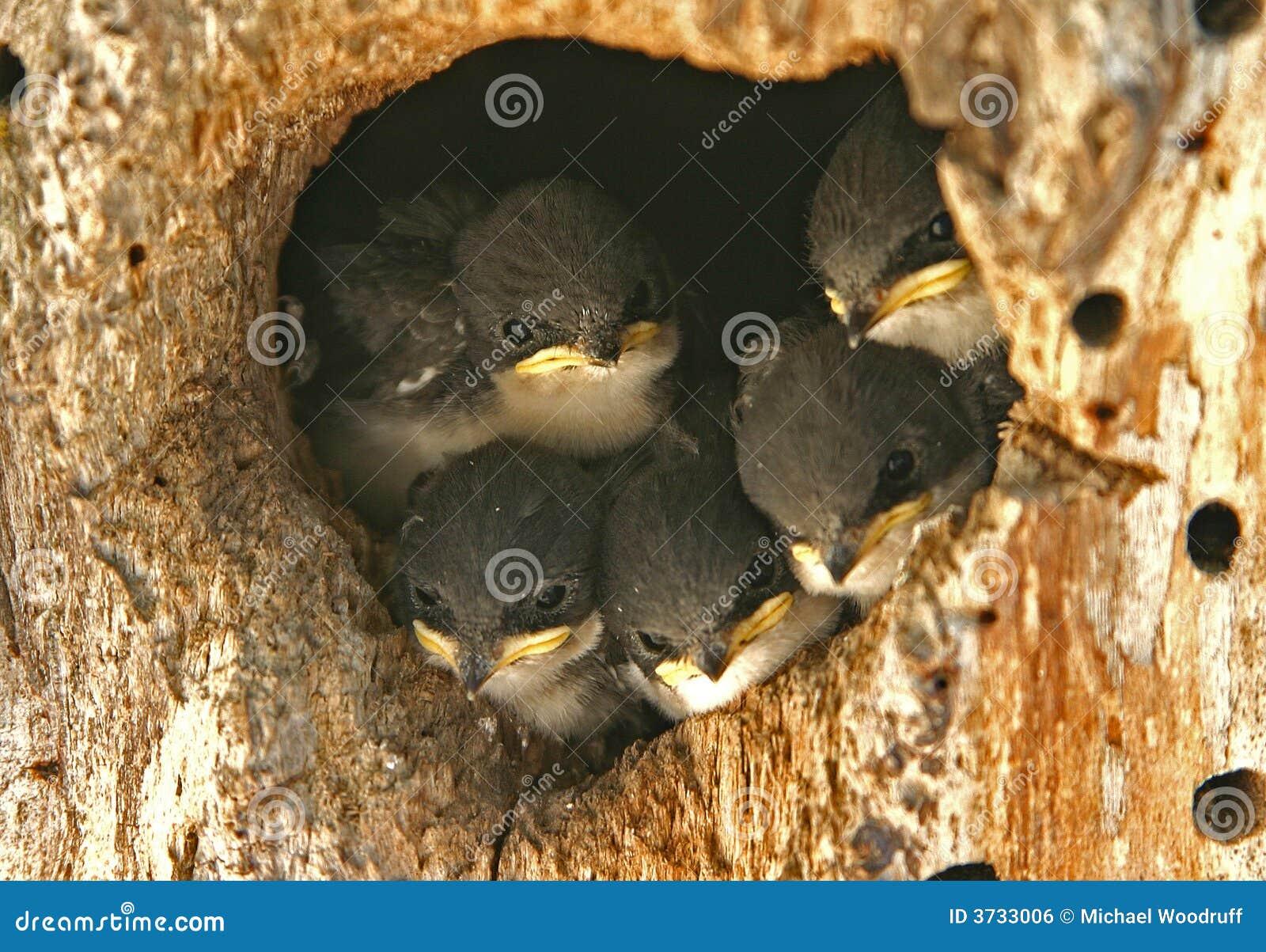 Slik Nest