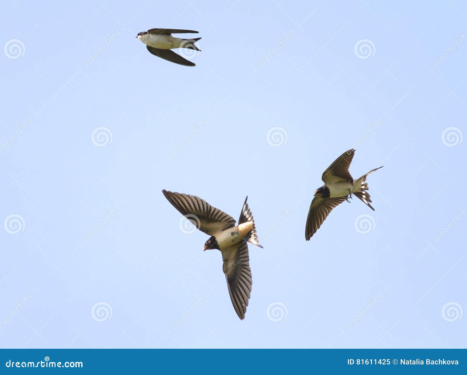 Slikt vlieghoogte in de hemel uitspreiden wijd zijn vleugels